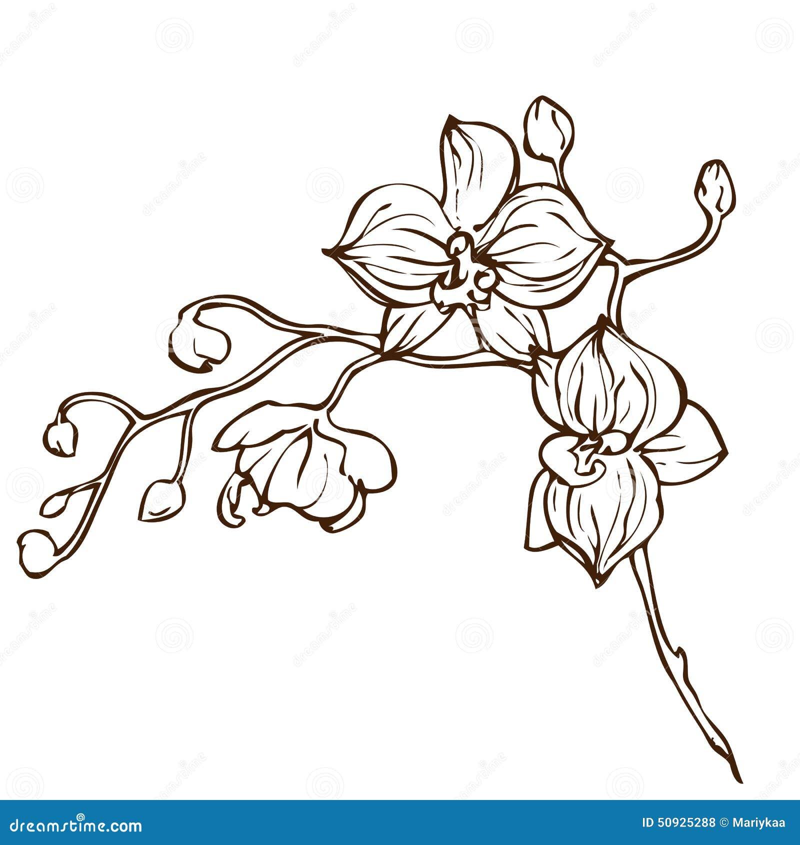 Fleur d 39 orchid e de dessin de main de vecteur illustration de vecteur image 50925288 - Dessin d orchidee ...