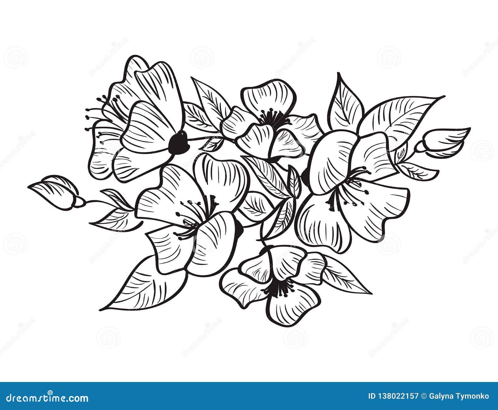 Fleur De Canina De Rosa De Vecteur Et De Croquis De Dessin
