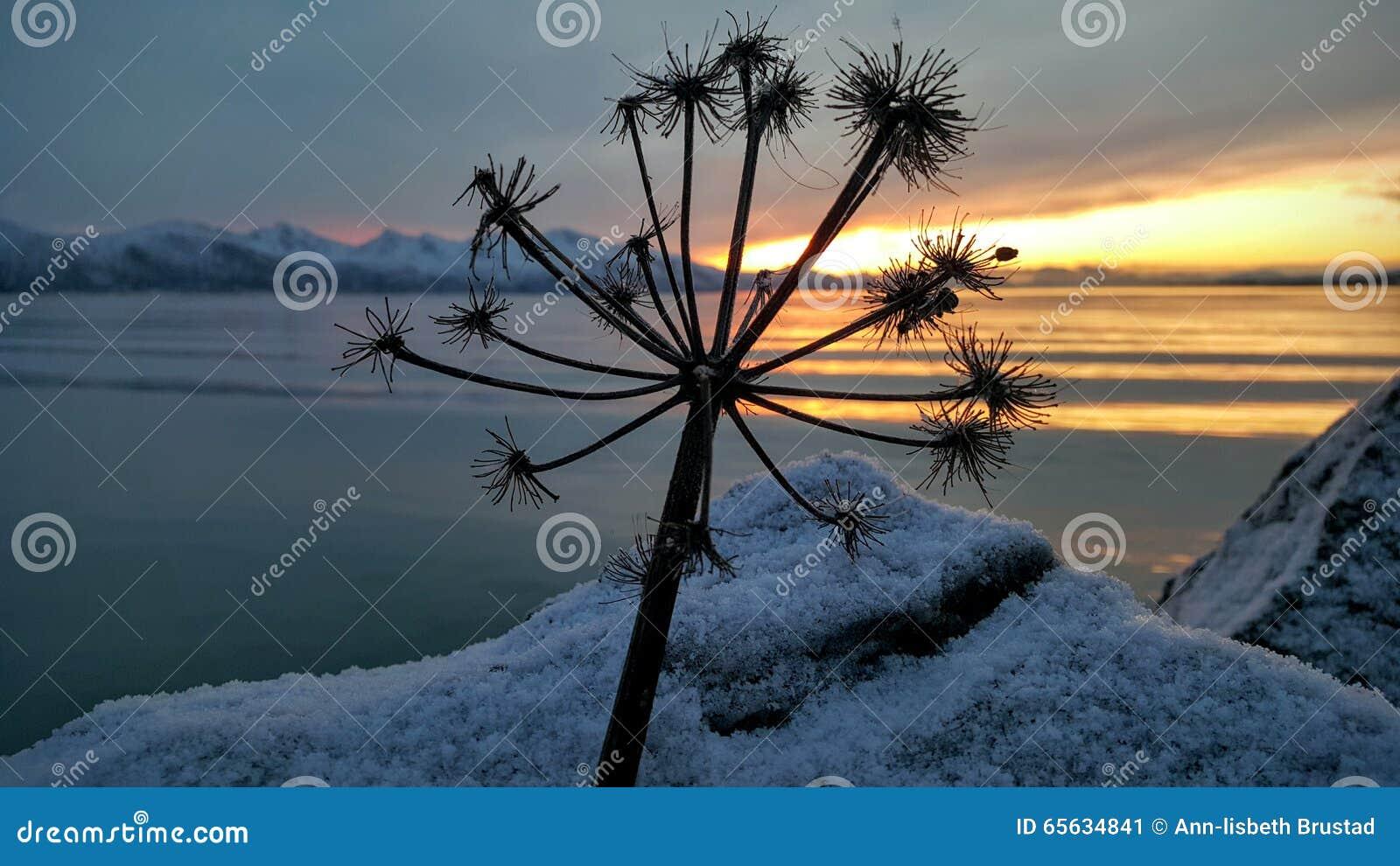 Fleur de coucher du soleil