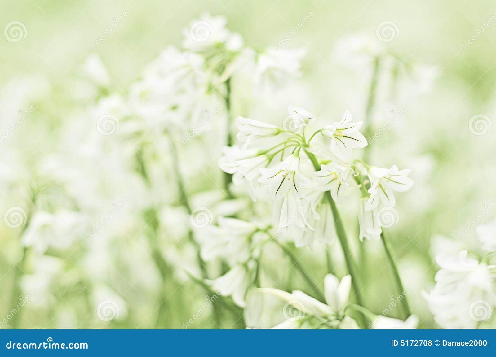 Fleur de flocon de neige d été