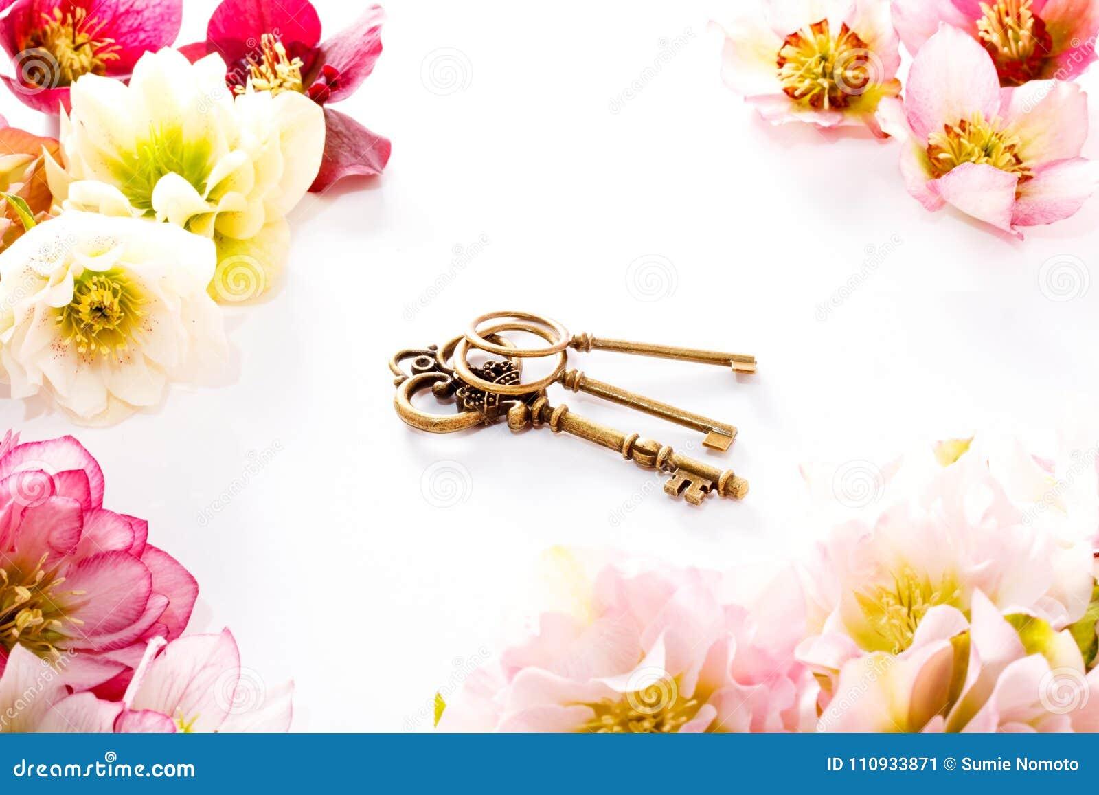 Fleur de Hellebore ou orientalis de Helleborus et clé antiqued d isolement sur le blanc