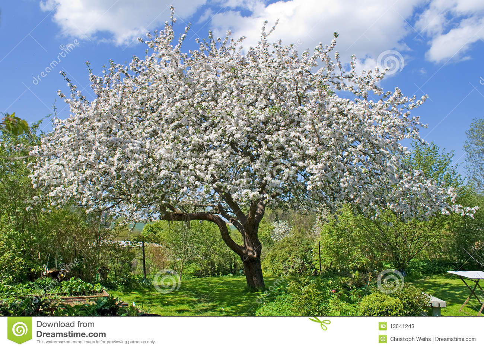 fleur de jardin d 39 arbre photos stock image 13041243. Black Bedroom Furniture Sets. Home Design Ideas