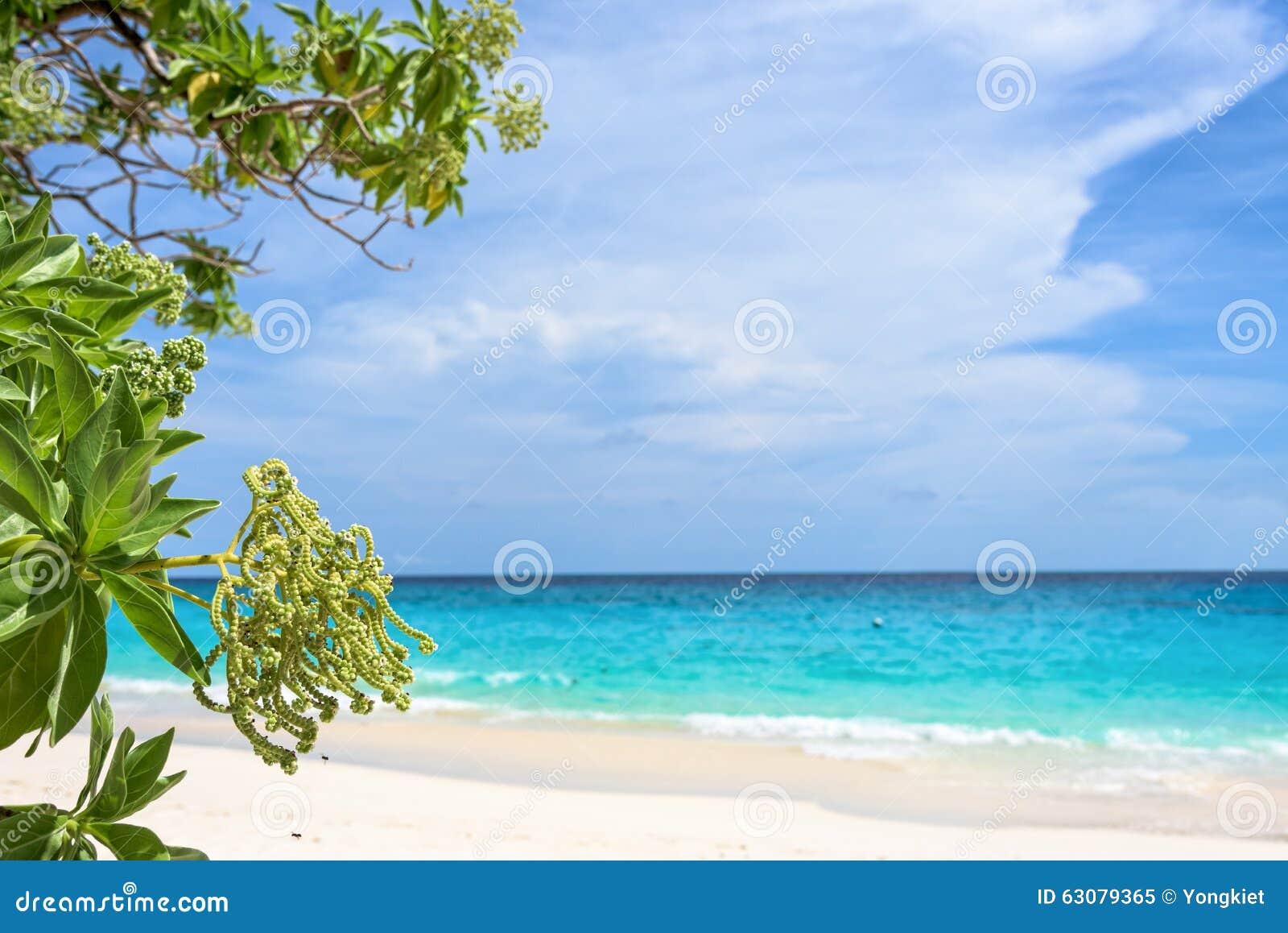 Download Fleur De L'argentea D'Argusia, Mer Comme Fond Image stock - Image du extérieur, vert: 63079365