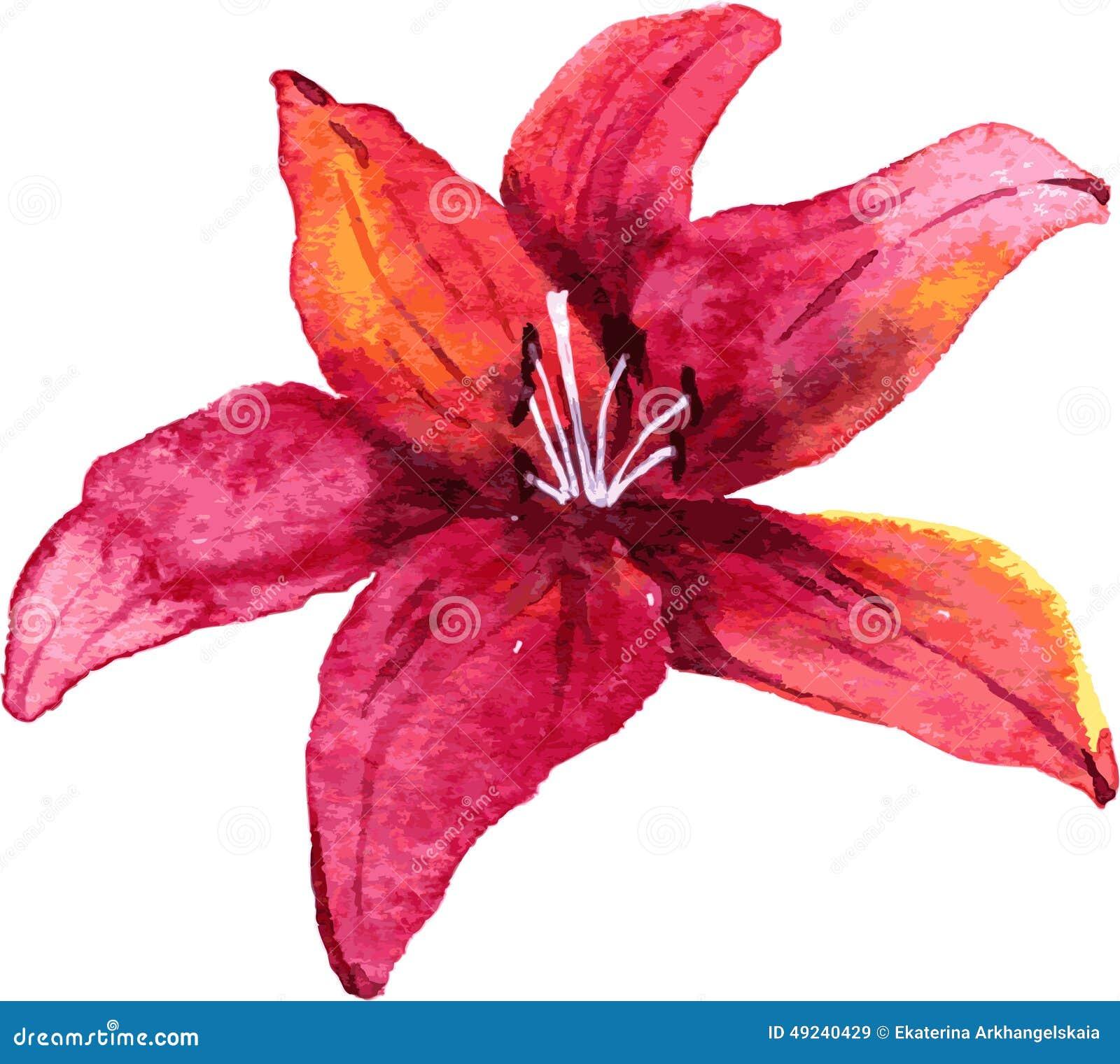 Fleur de lis de dessin d 39 aquarelle illustration de vecteur image 49240429 - Dessin de fleur facile ...