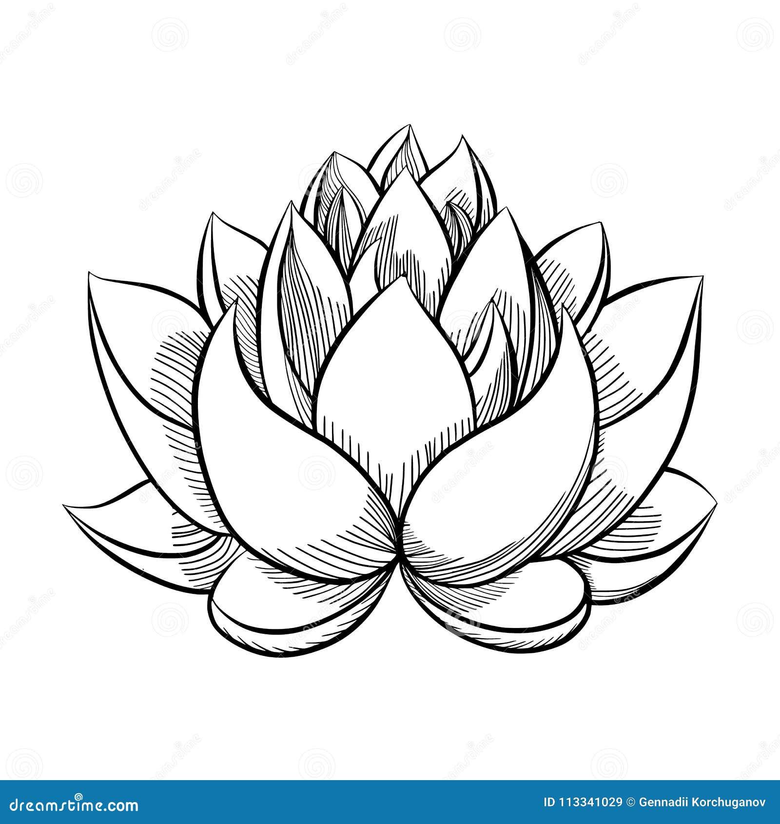Fleur de fleur de Lotus illustration de vecteur ...