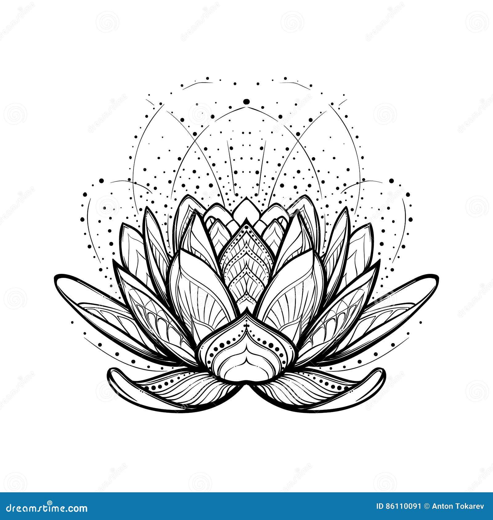 Fleur De Lotus Dessin Linéaire Stylisé Complexe Disolement