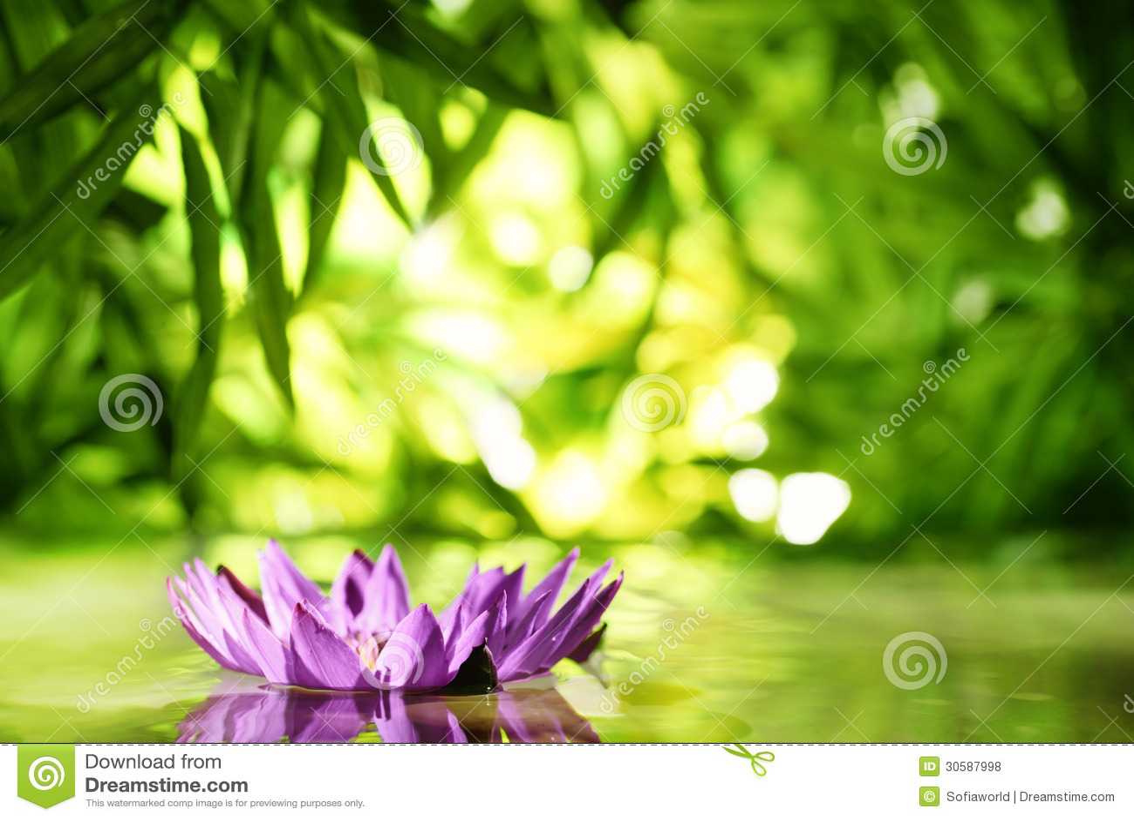 Fleur de lotus flottant sur l 39 eau photo stock image du alba bambou 30587998 - Image fleur de lotus ...