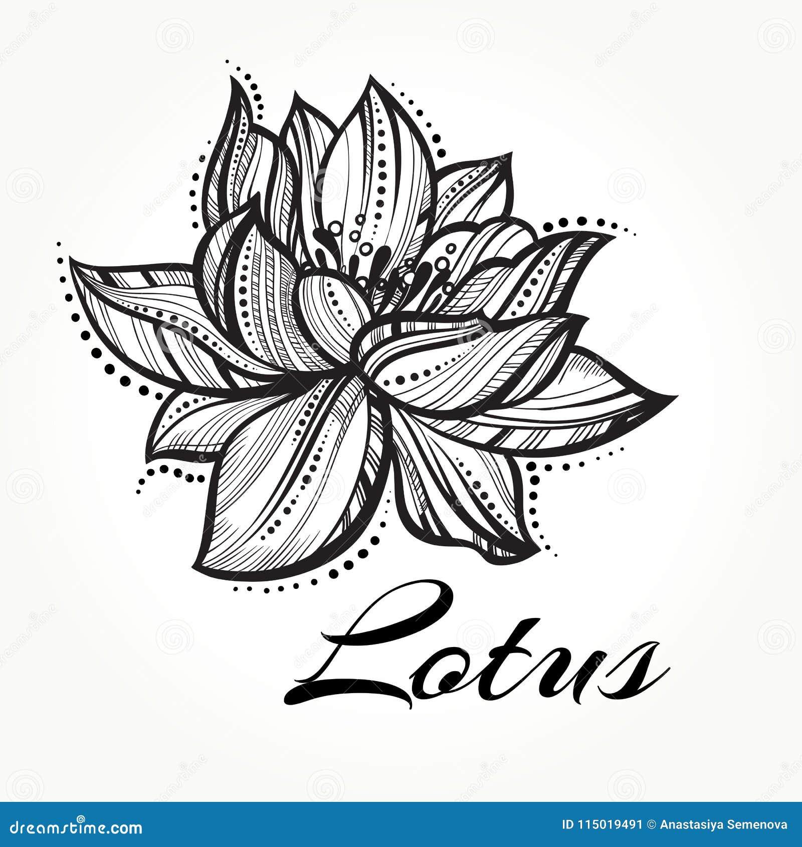 Fleur De Lotus Haut Detaillee De Vecteur Belle Tatouage Yoga