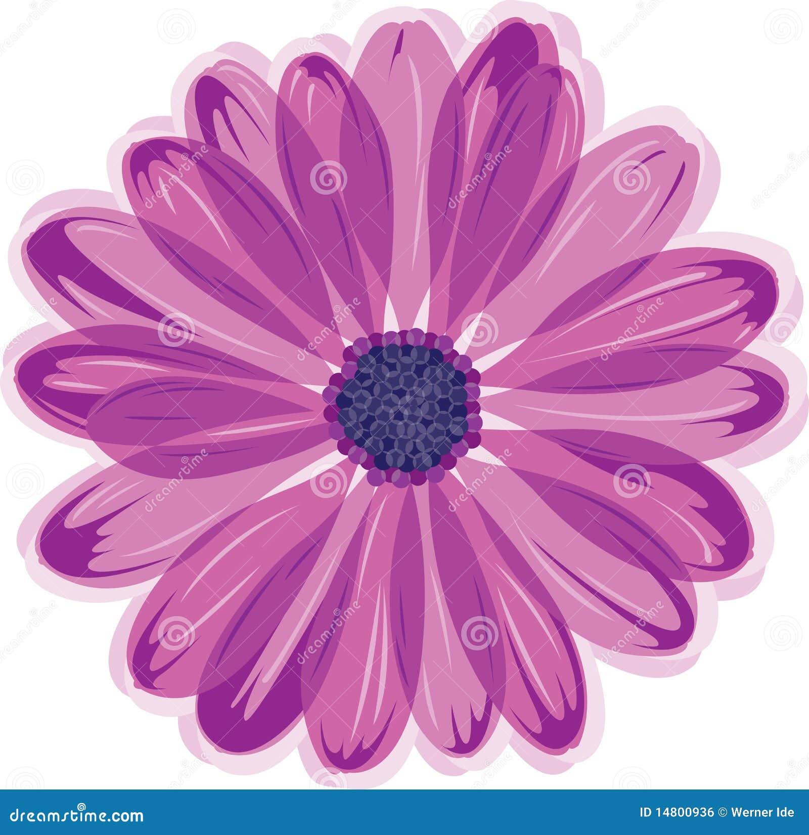Fleur de marguerite image libre de droits image 14800936 - Image fleur marguerite ...