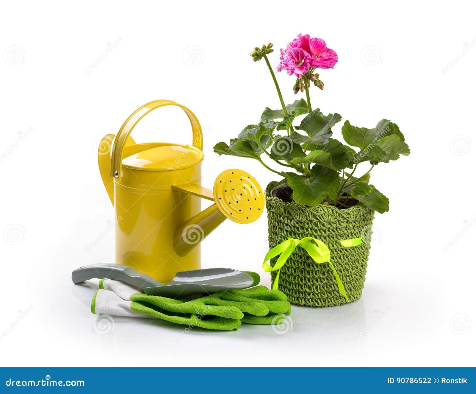 Fleur de pélargonium et outils de jardinage mis en pot sur le blanc