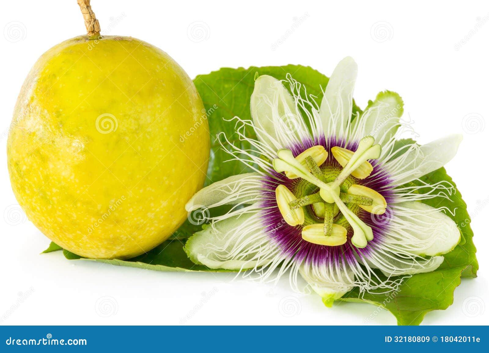 fleur de passiflore comestible de passiflore avec la. Black Bedroom Furniture Sets. Home Design Ideas