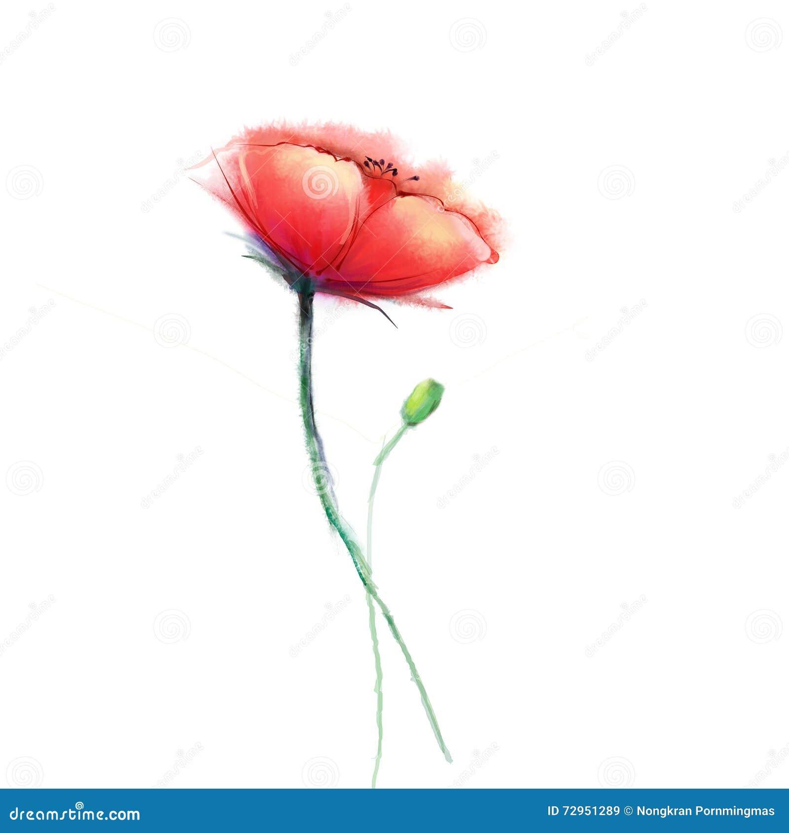 fleur de pavot de peinture d 39 aquarelle fleurs d 39 isolement. Black Bedroom Furniture Sets. Home Design Ideas