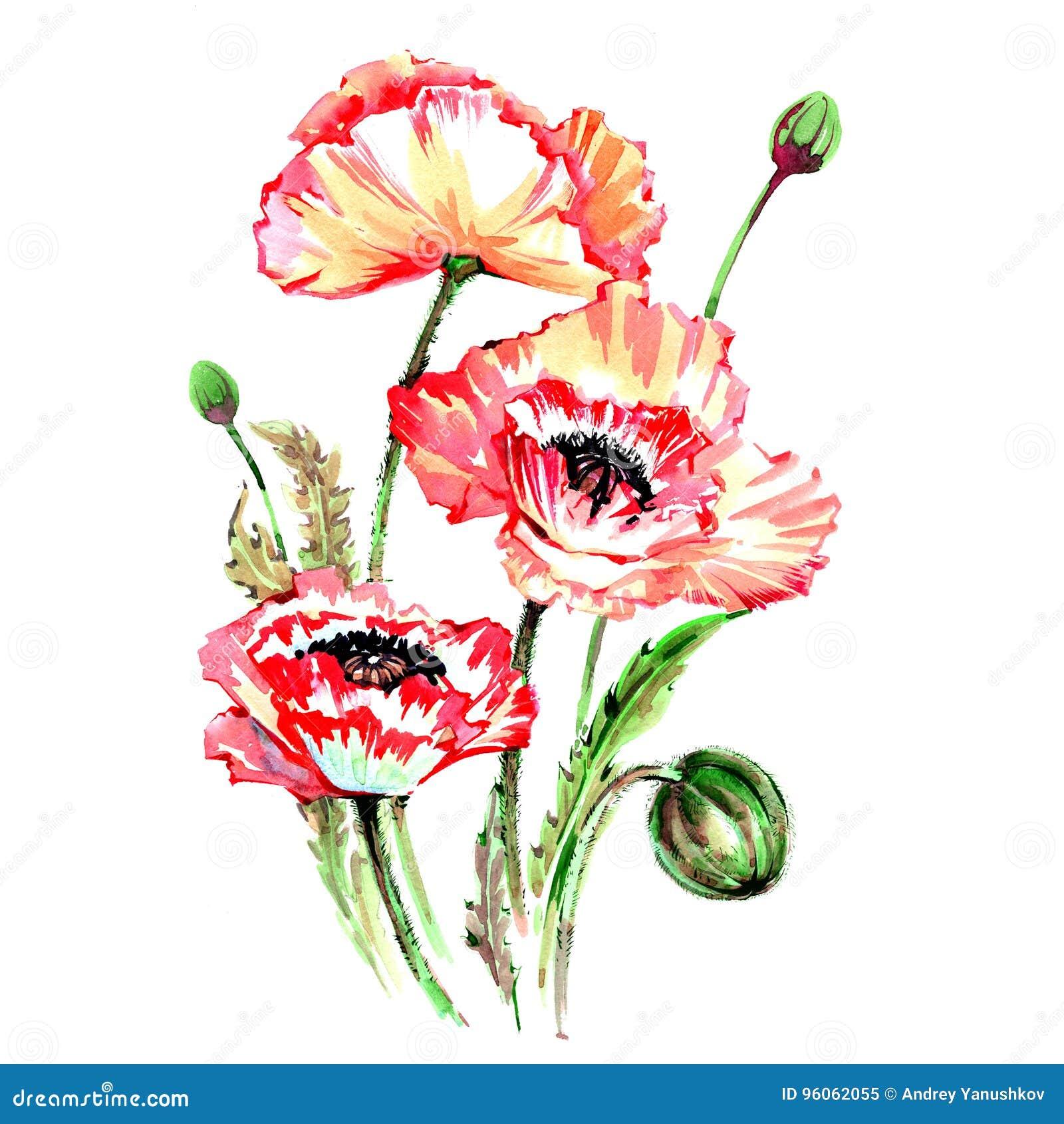 Fleur de pavot de Wildflower dans un style d aquarelle d isolement
