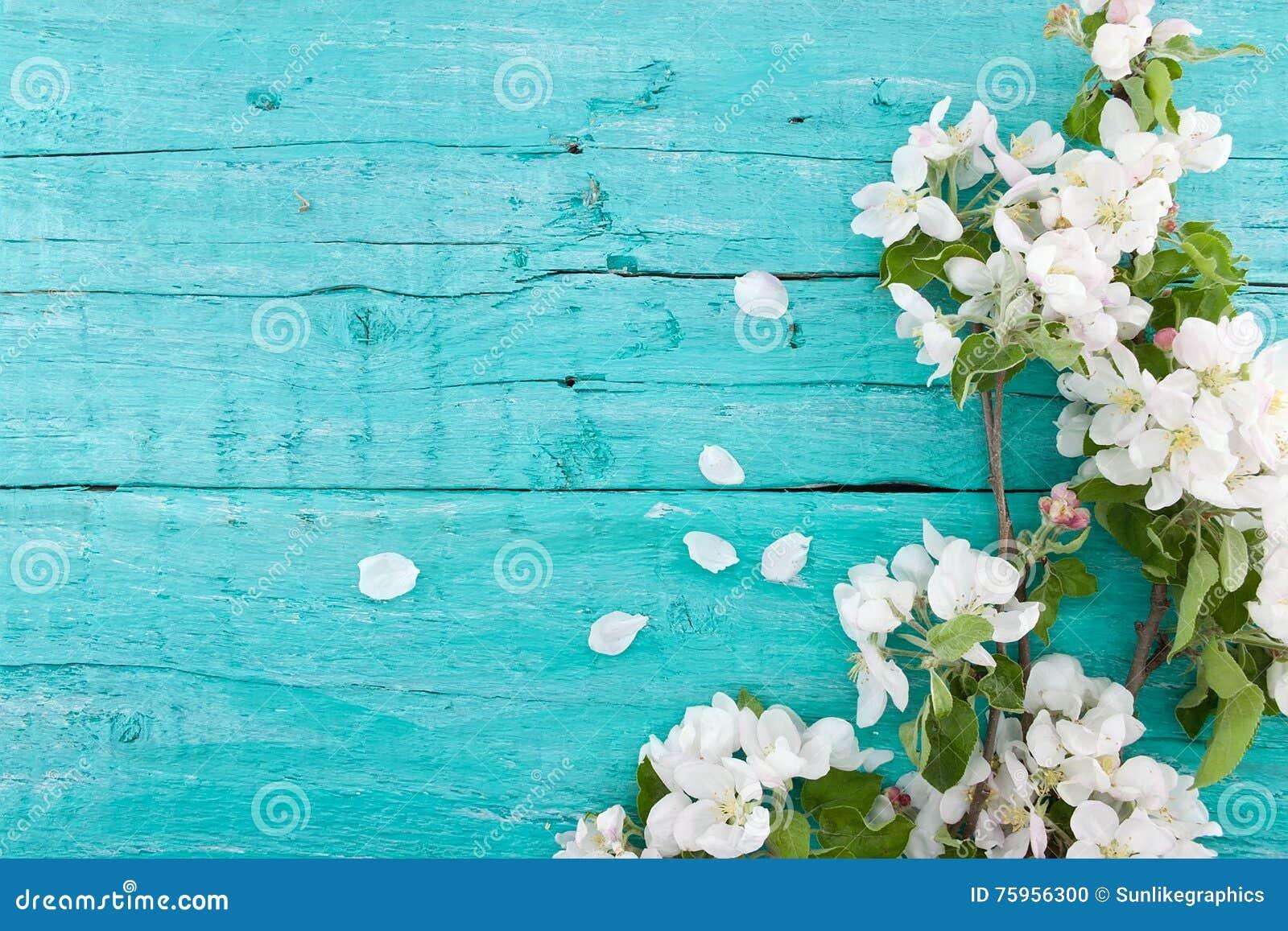 Fleur de pommier de ressort sur le fond en bois rustique de turquoise