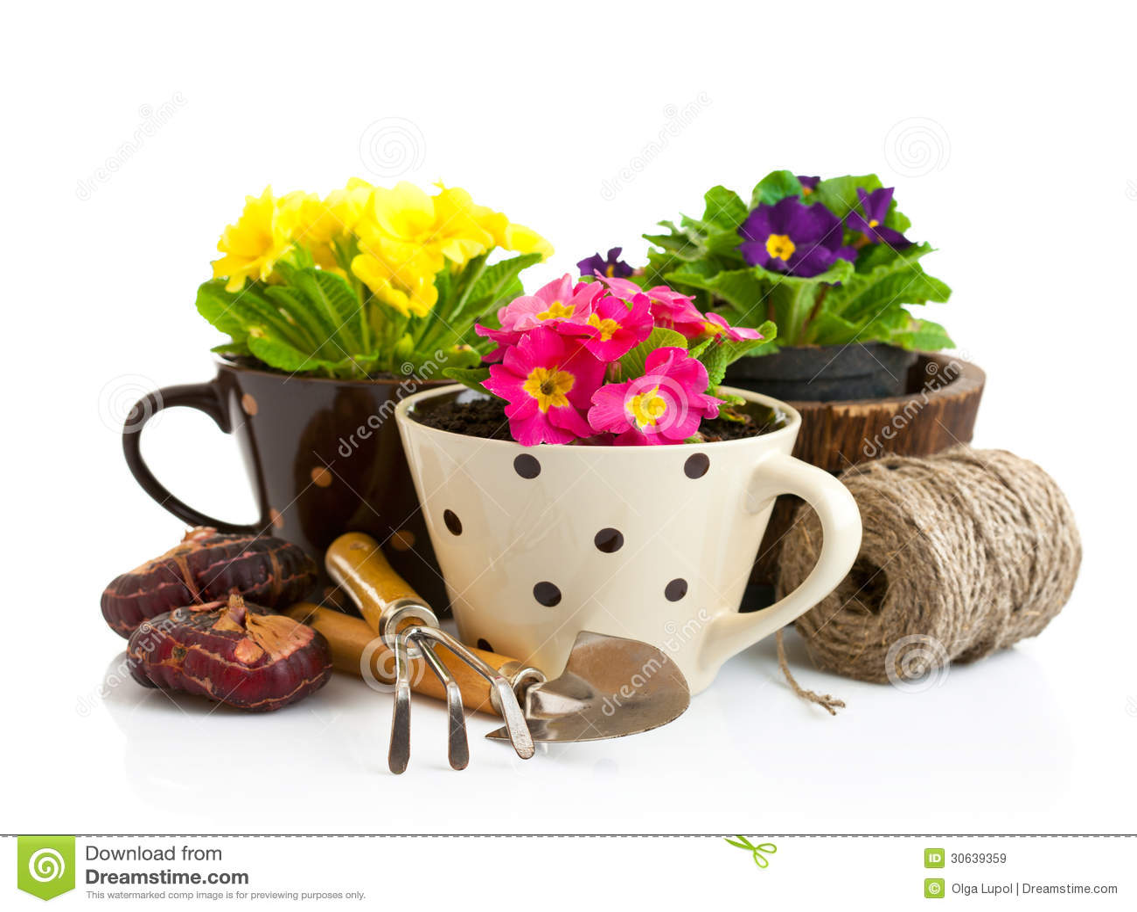 Fleur de ressort dans le pot avec des outils de jardin image stock image du pourpr - Outils de jardinage avec images ...