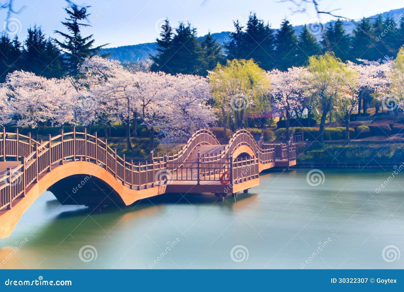 Saison de fleurs de cerisier en Corée