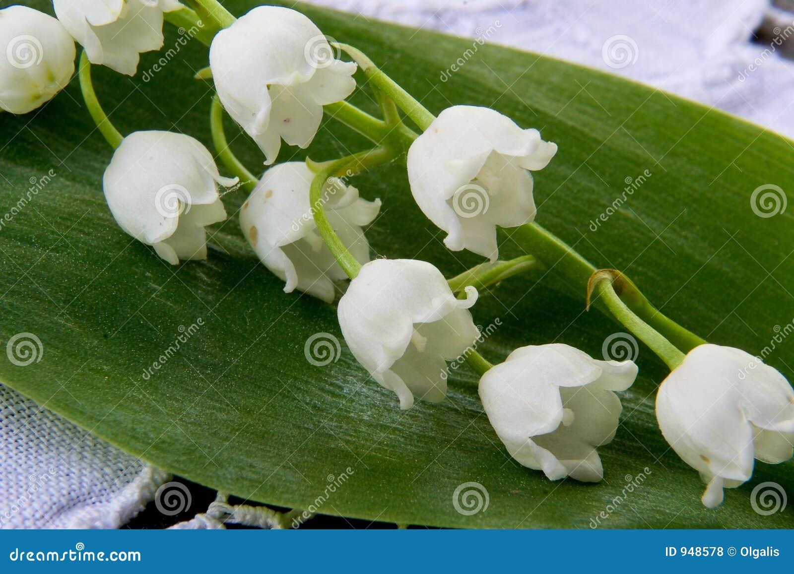 Fleur de source un muguet photos stock inscription gratuite for Bouquet de fleurs muguet