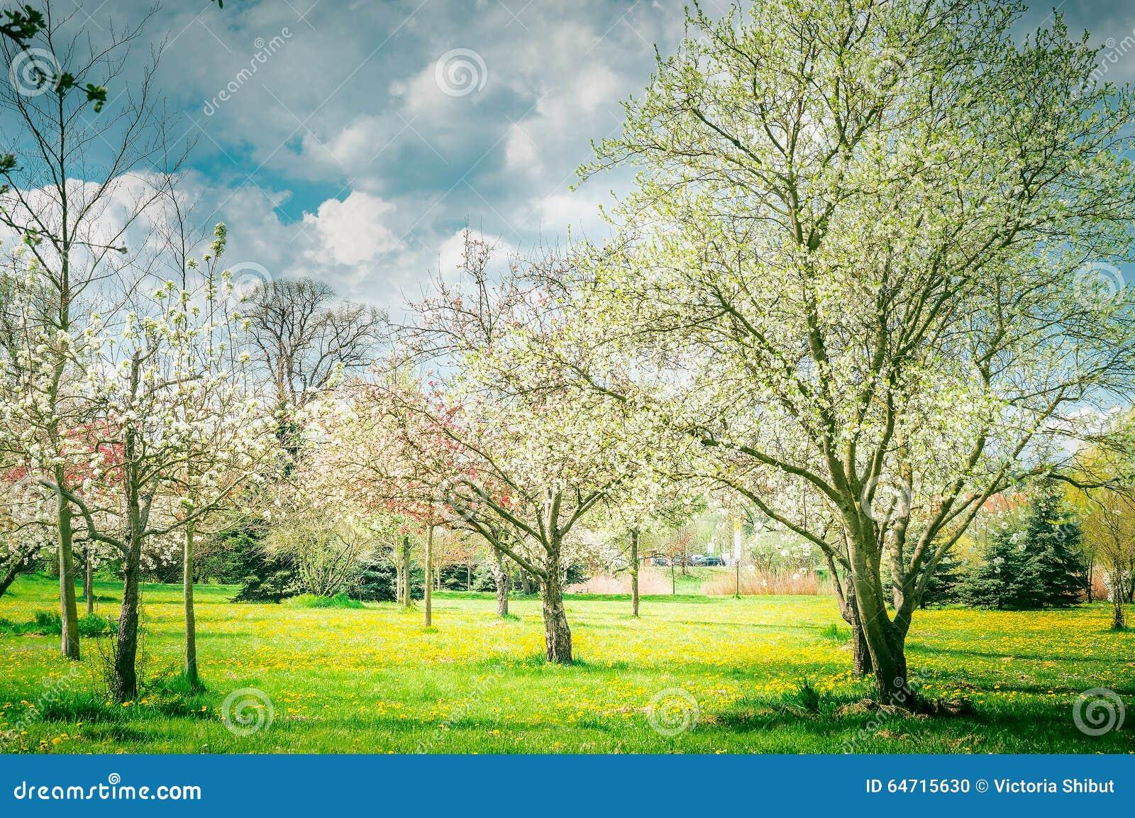 Fleur des arbres fruitiers jardin ou parc nature de source for Arbres de jardin