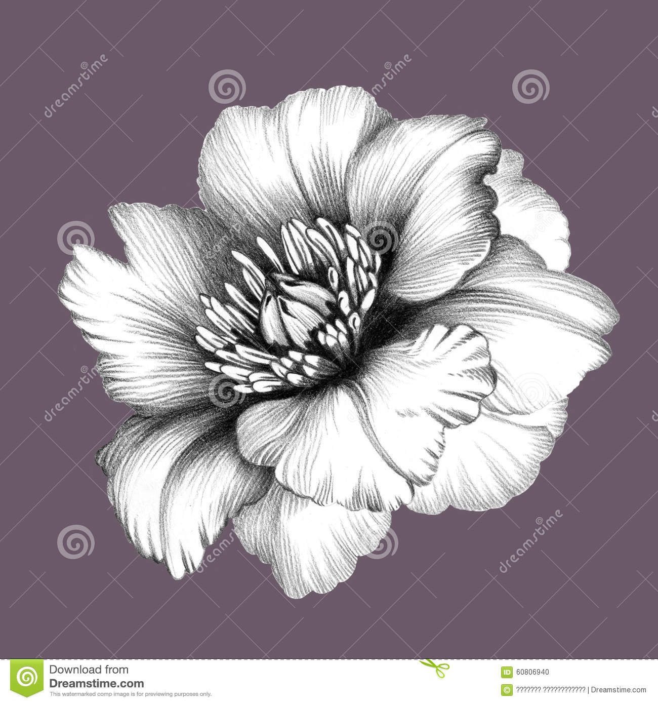 Fleur Dessin Au Crayon Illustration Stock Illustration Du