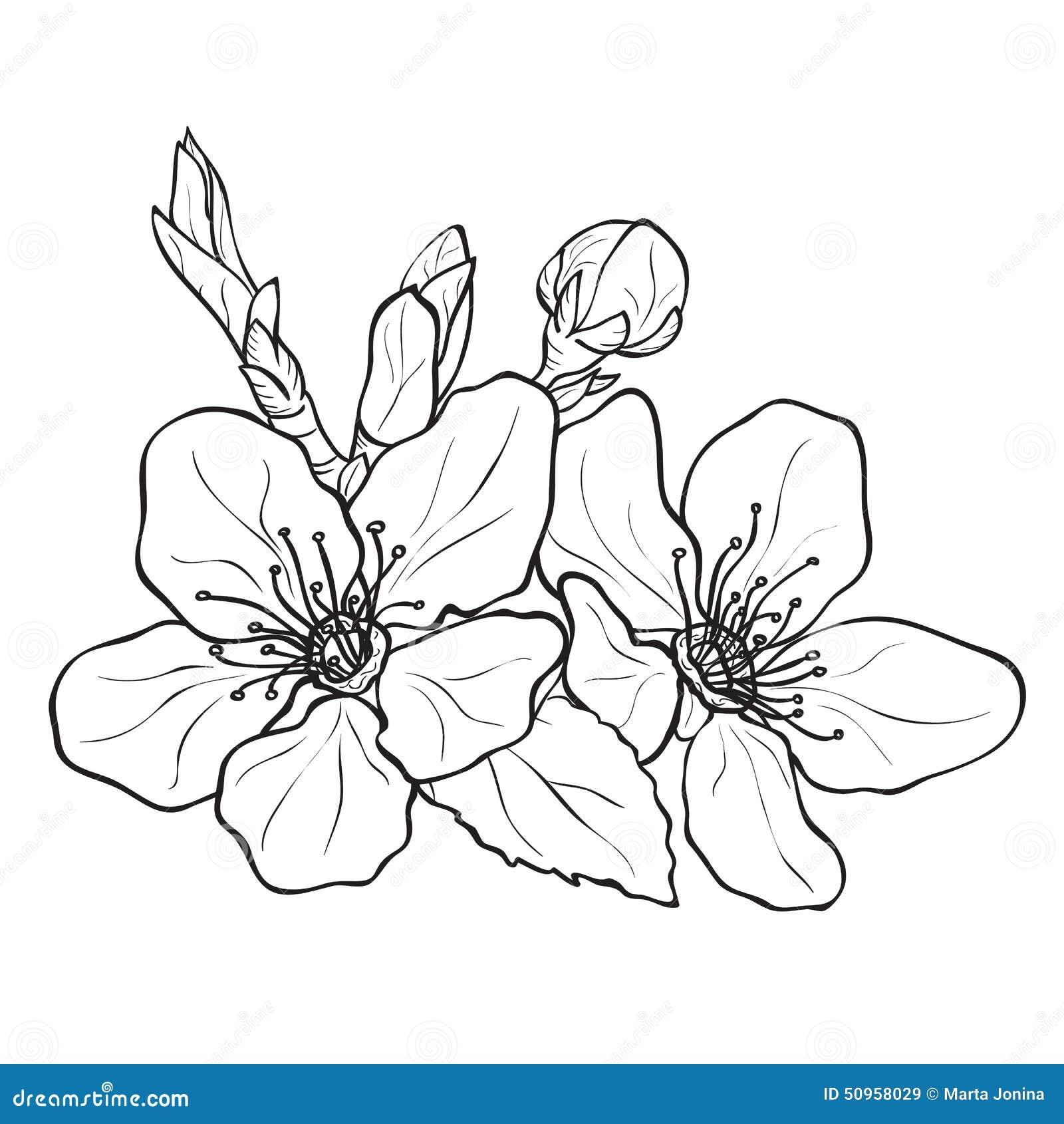 Fleur dessin de fleurs de cerisier illustration stock - Dessin fleur de cerisier ...