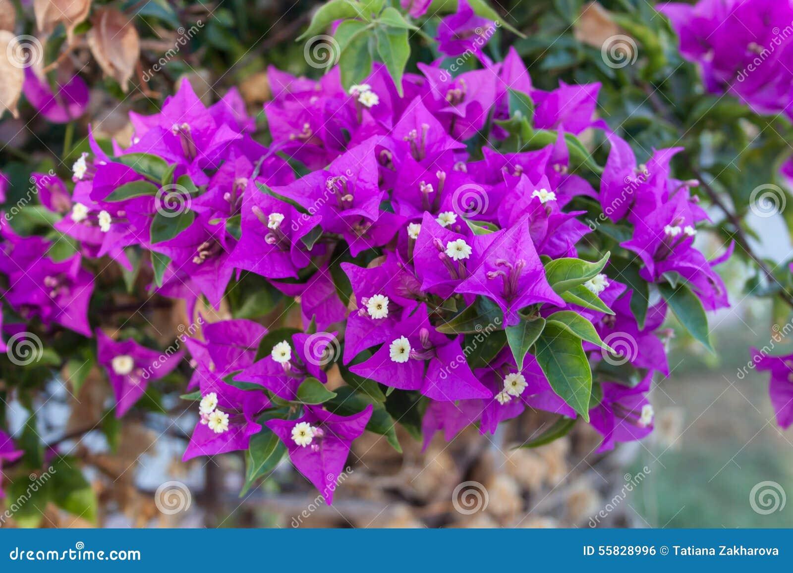 fleur du sud photo stock - image: 55828996