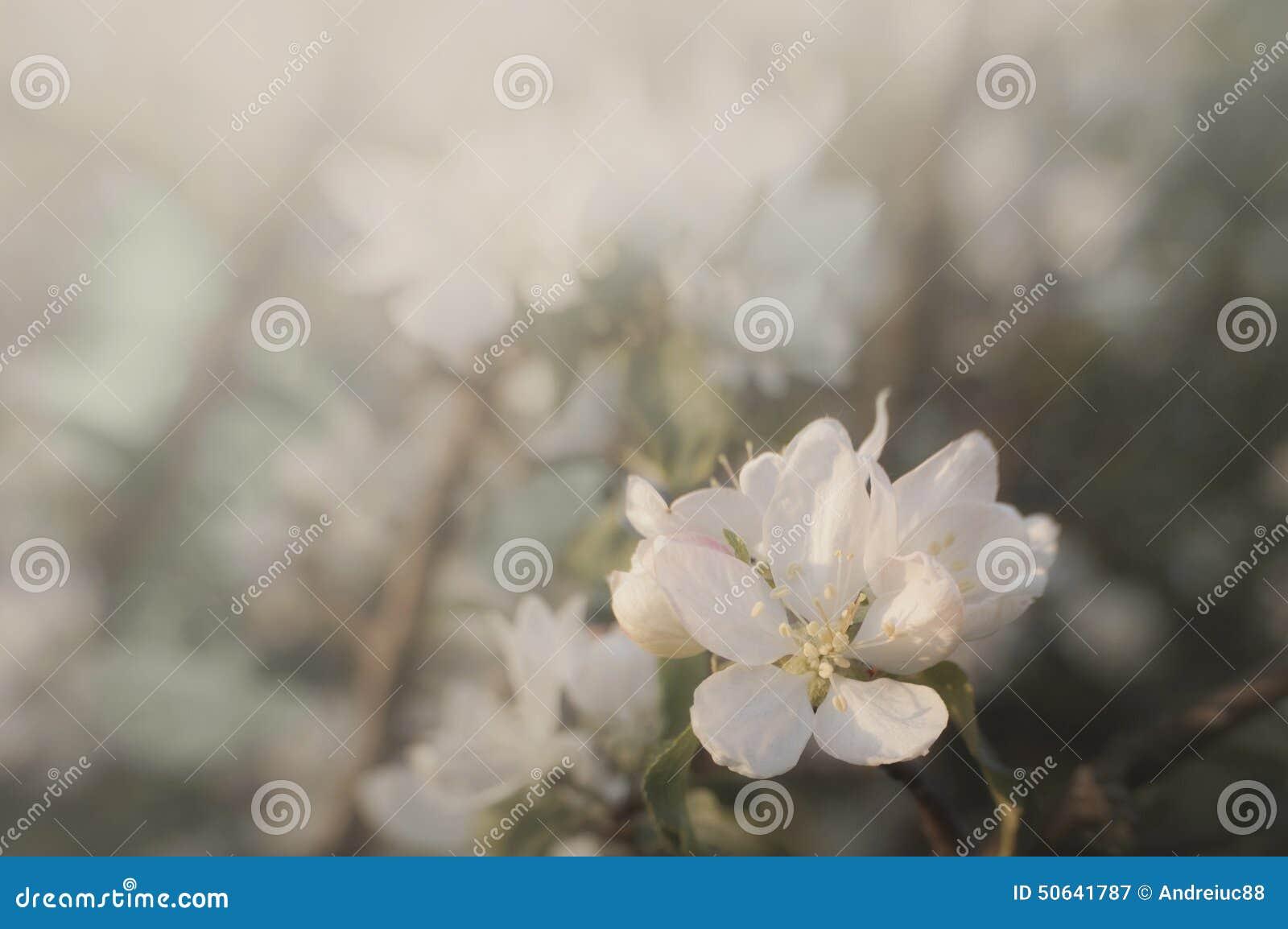 Fleur en fleur au printemps