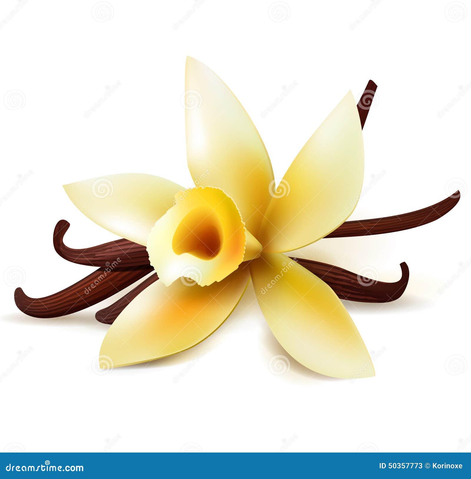 cosses et fleur de vanille image libre de droits - image: 29212496