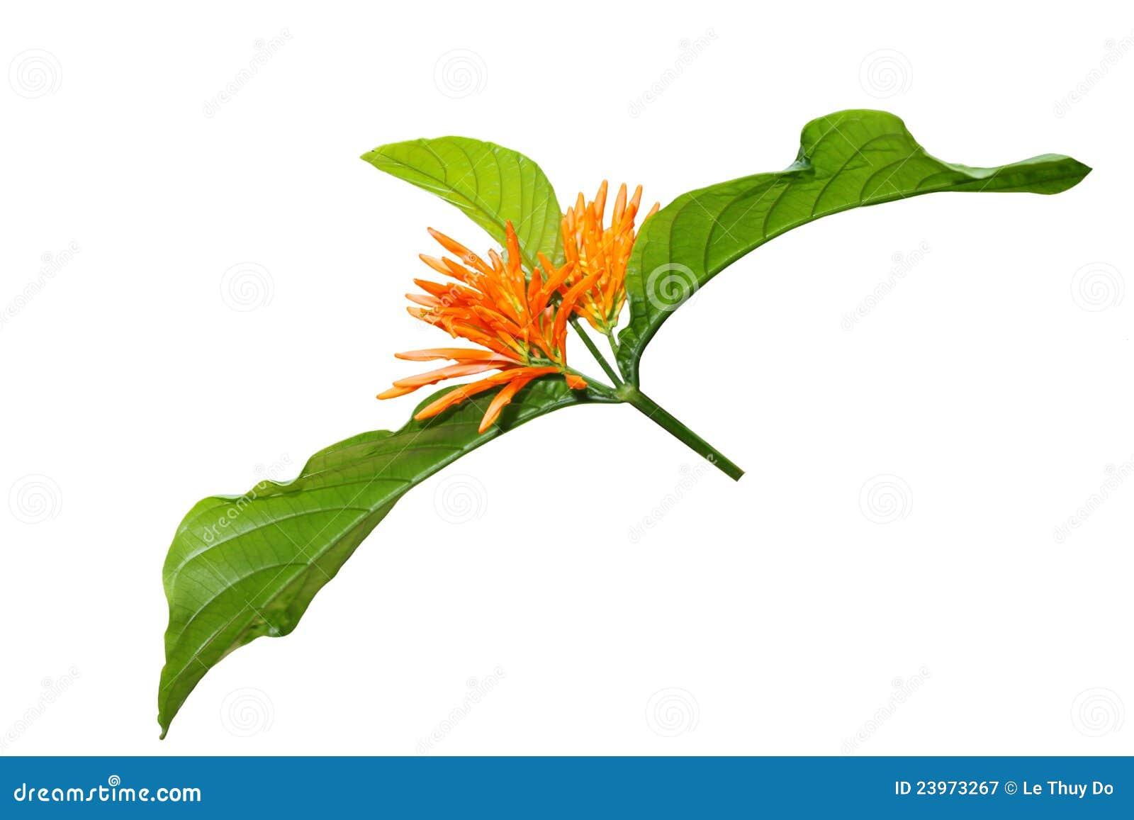 fleur exotique orange photographie stock libre de droits image 23973267. Black Bedroom Furniture Sets. Home Design Ideas