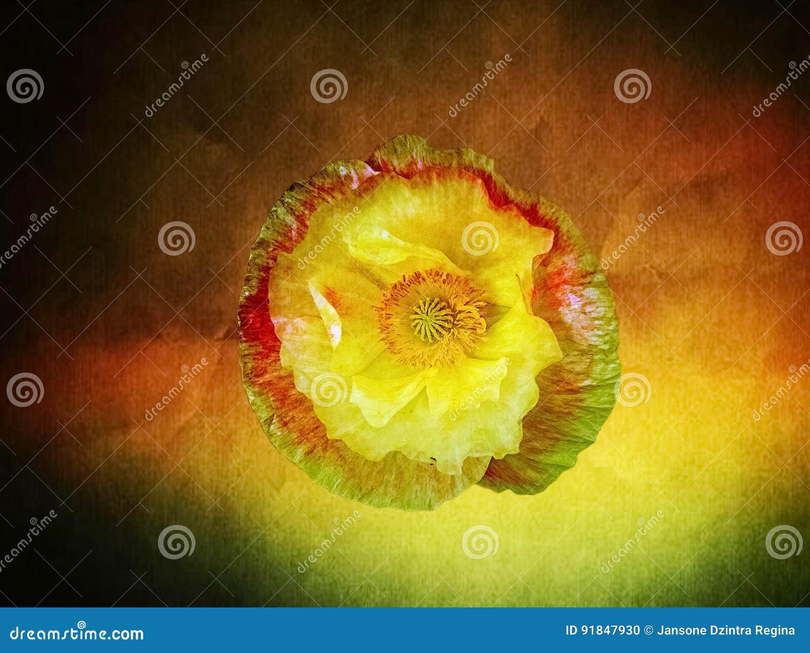 Fleur féerique