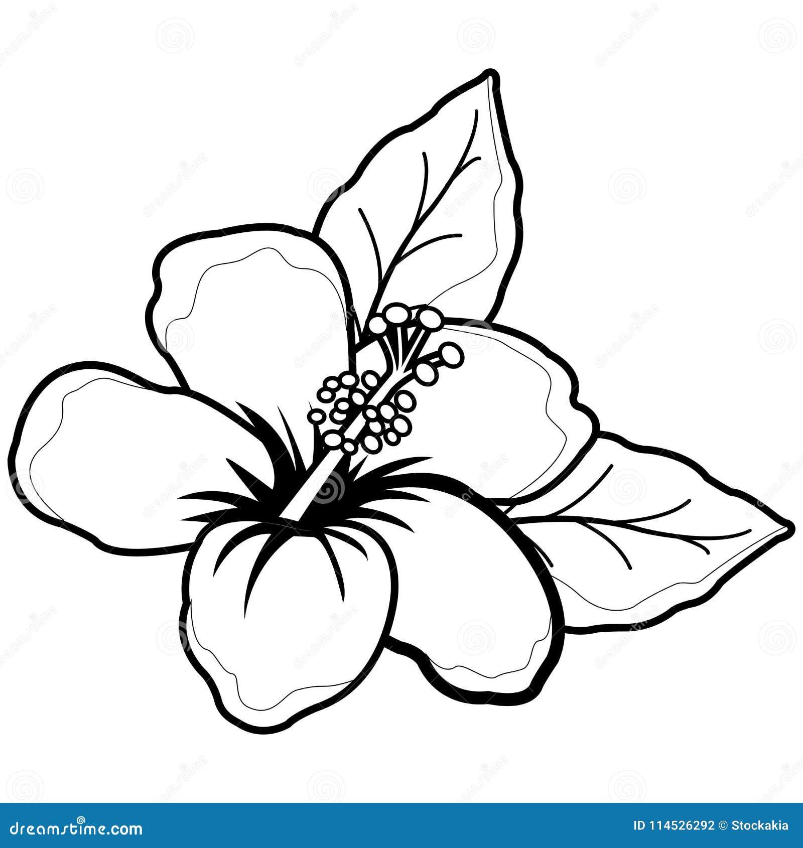 Fleur hawa enne de ketmie page noire et blanche de livre de coloriage illustration de vecteur - Coloriage hawaienne ...