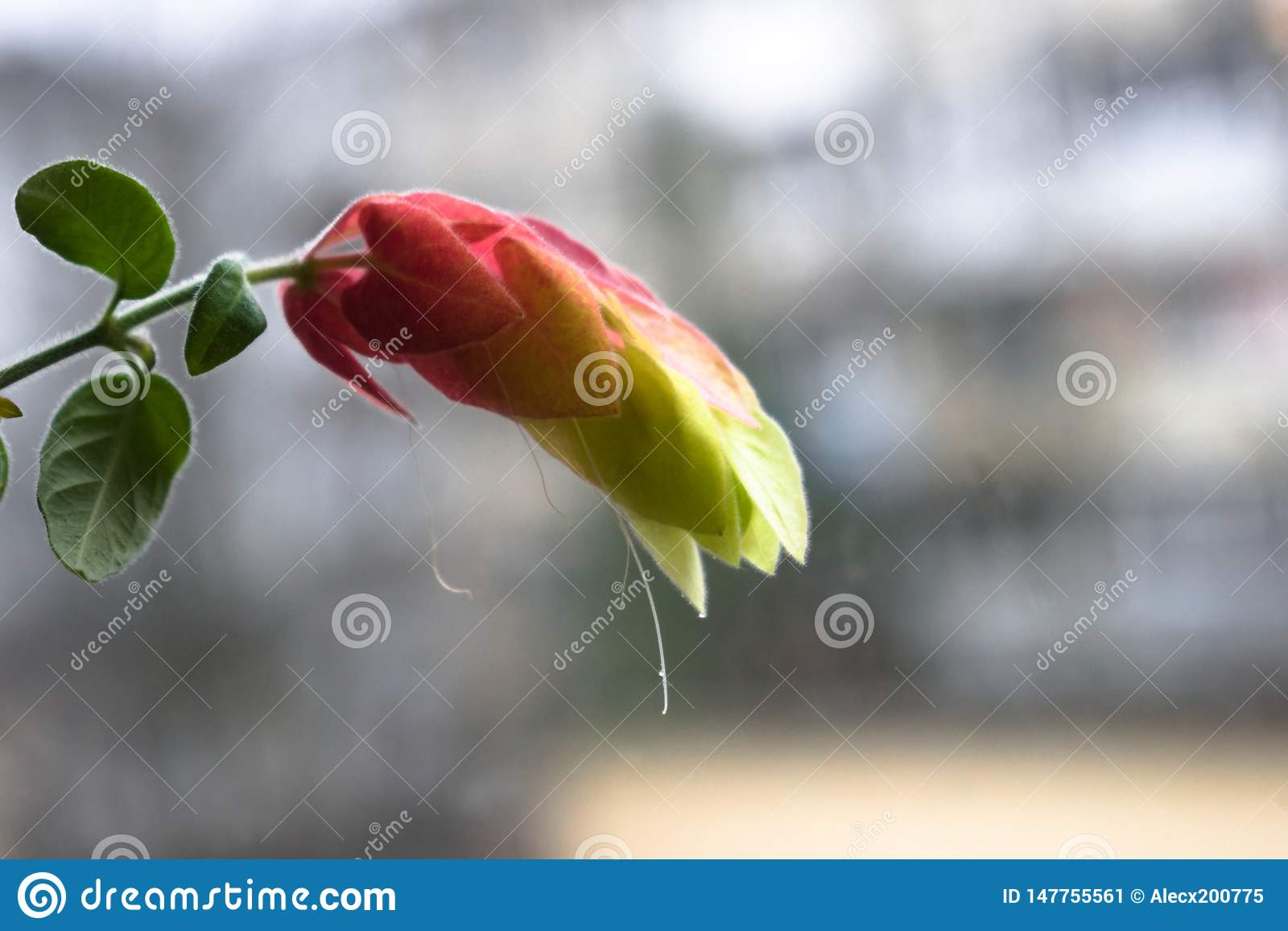 Fleur incroyablement belle avec le fond brouillé