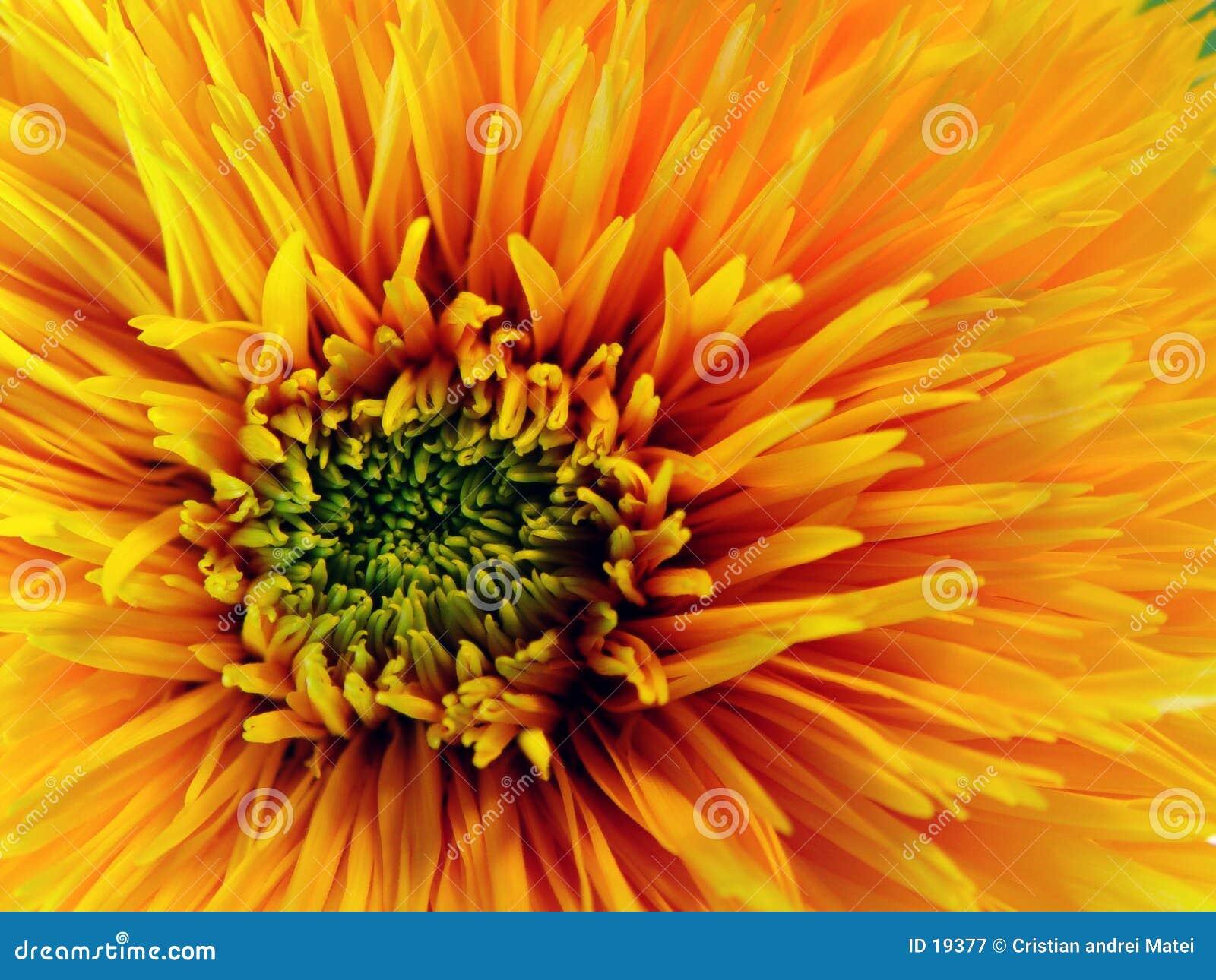 Fleur jaune