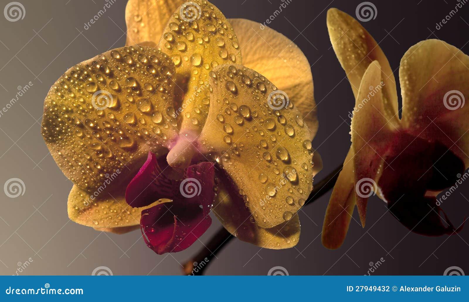 Fleur jaune d orchidée