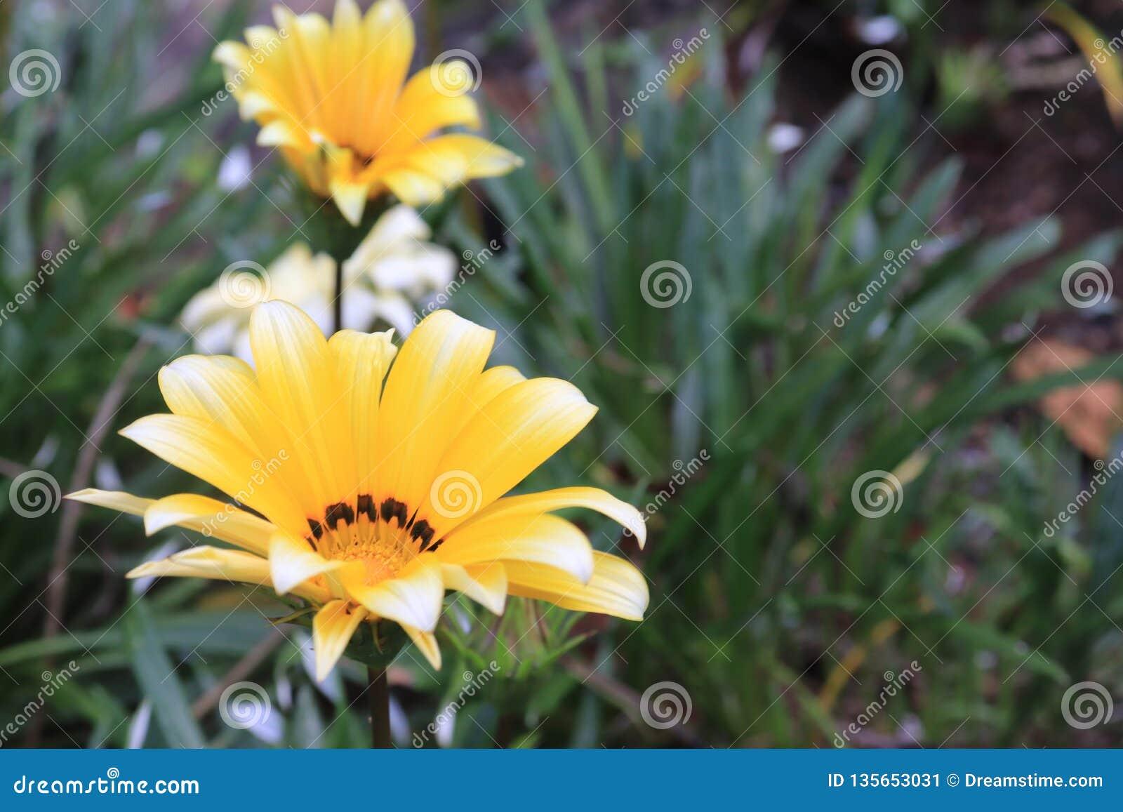 Fleur jaune fascinante avec le fond de forêt