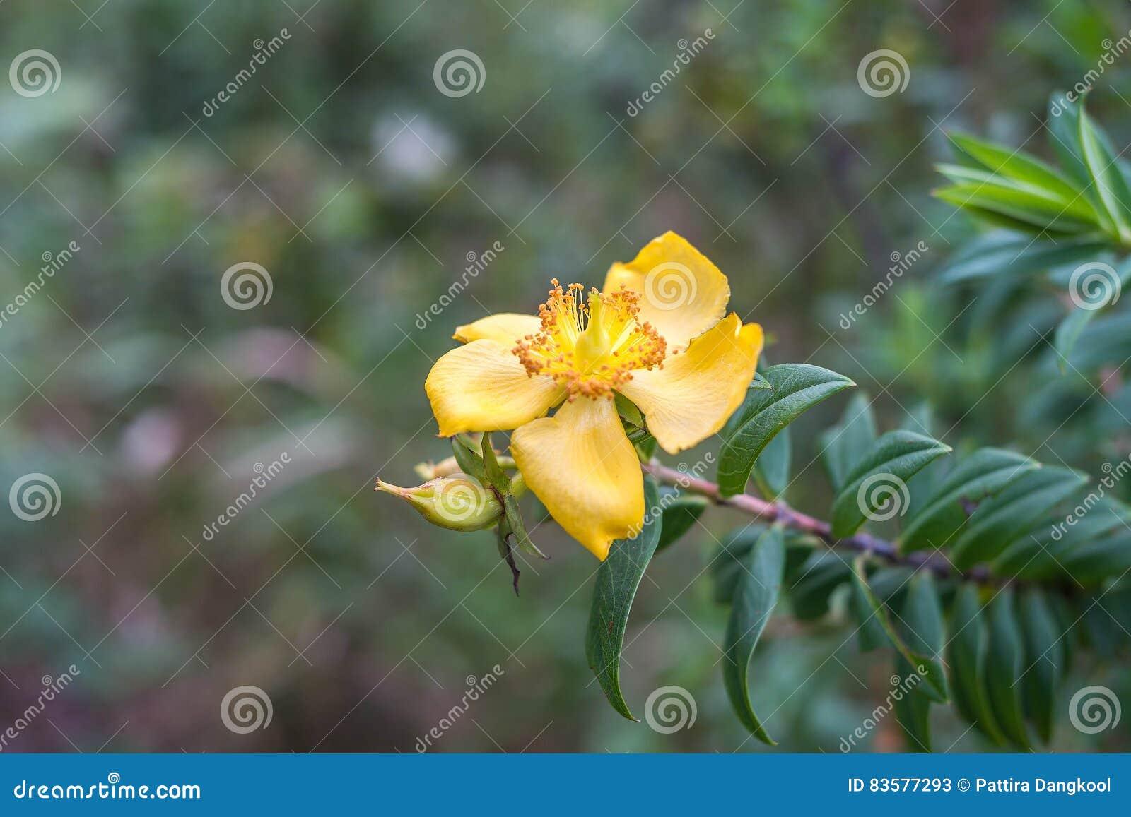 Fleur Jaune Sur L Arbre Image Stock Image Du Petale 83577293
