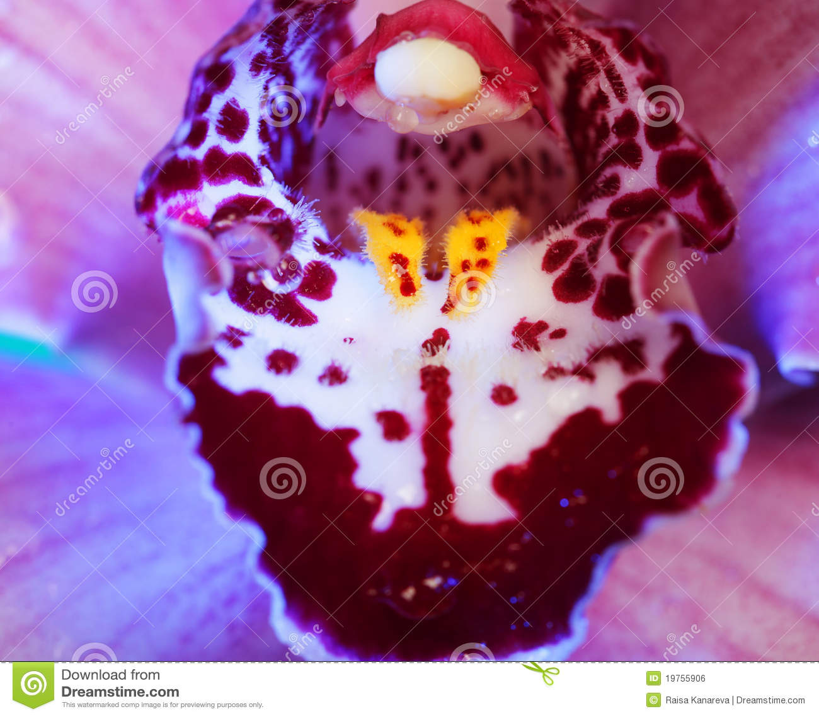 fleur magnifique d'orchidée image libre de droits - image: 19755906