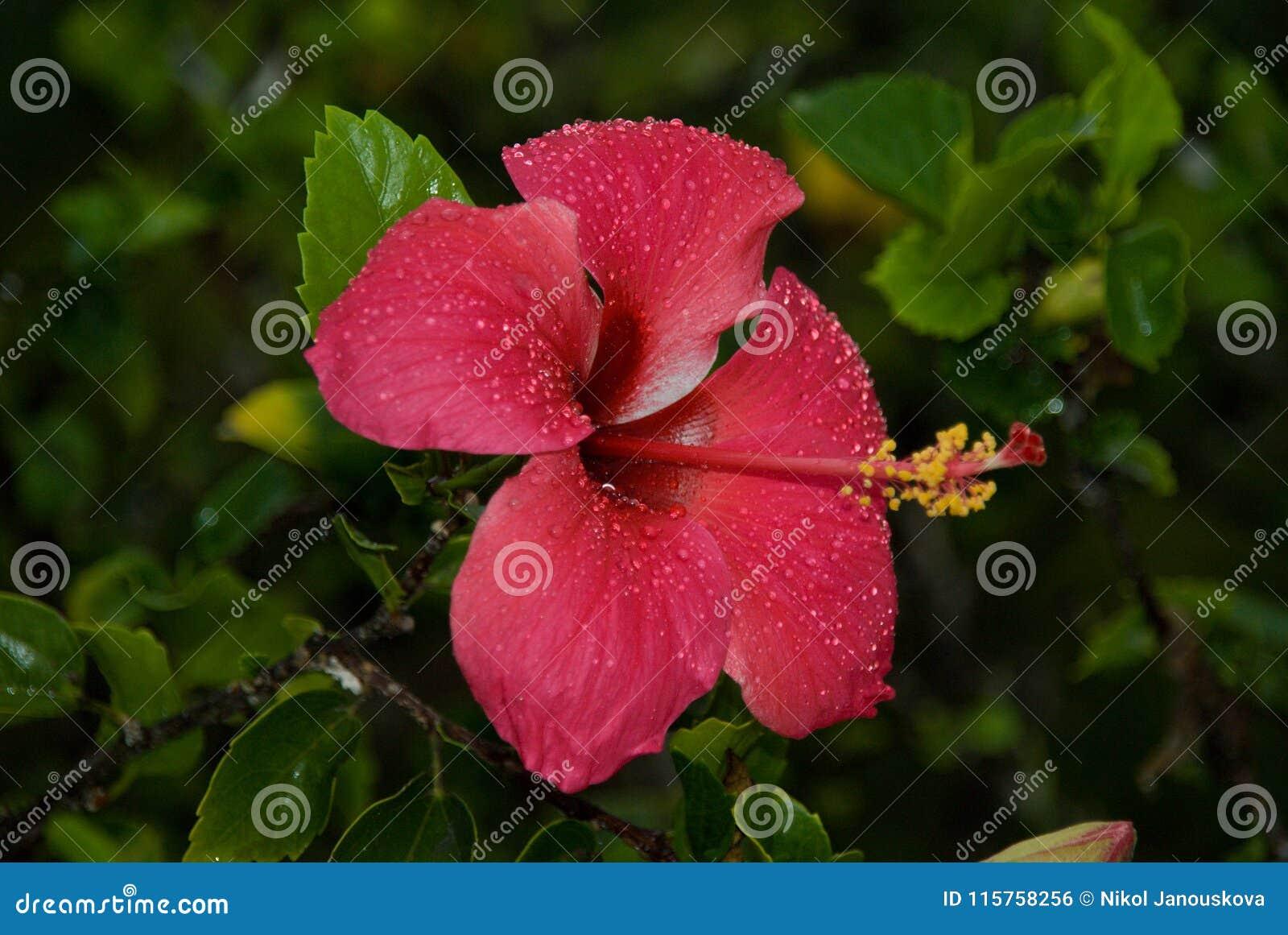Fleur Nature Red Pink Plant Zanzibar Stock Photo Image Of Macro