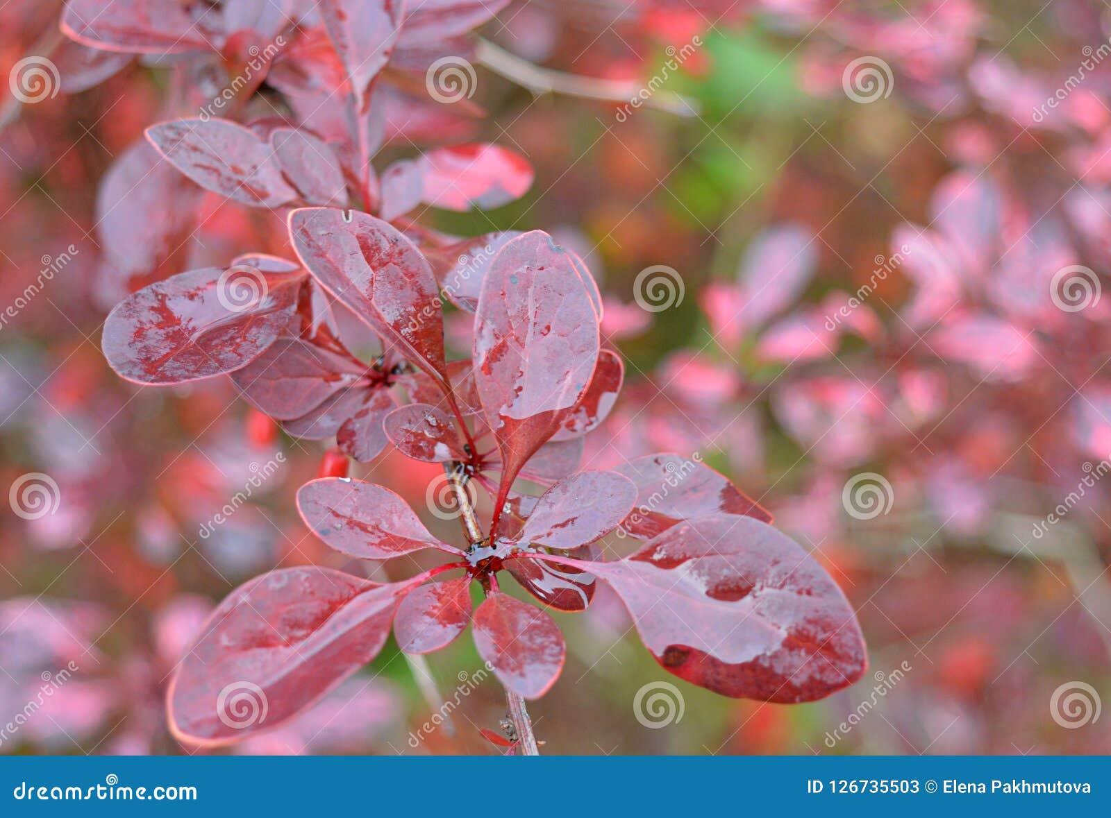 Fleur Nature Rose Ressort Fleur Fleurs Usine Jardin Vert