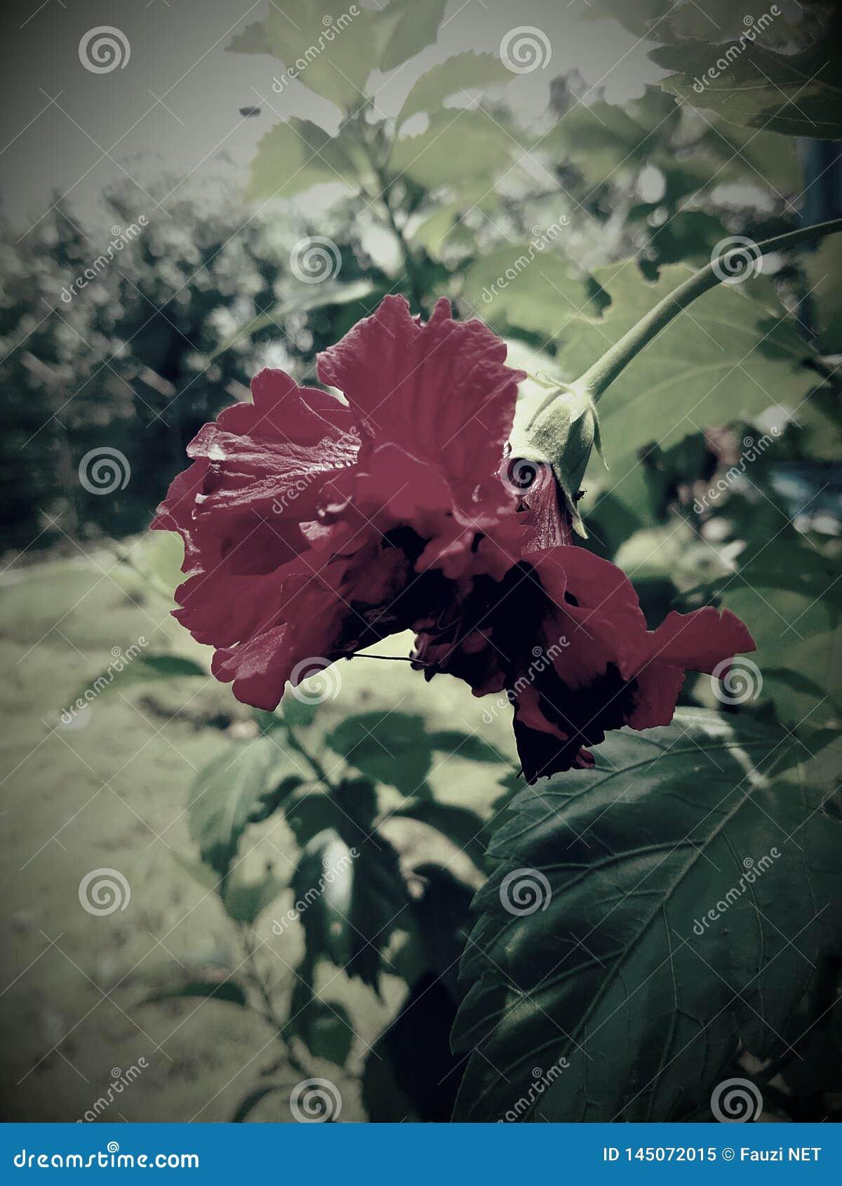 Fleur noire de miroir