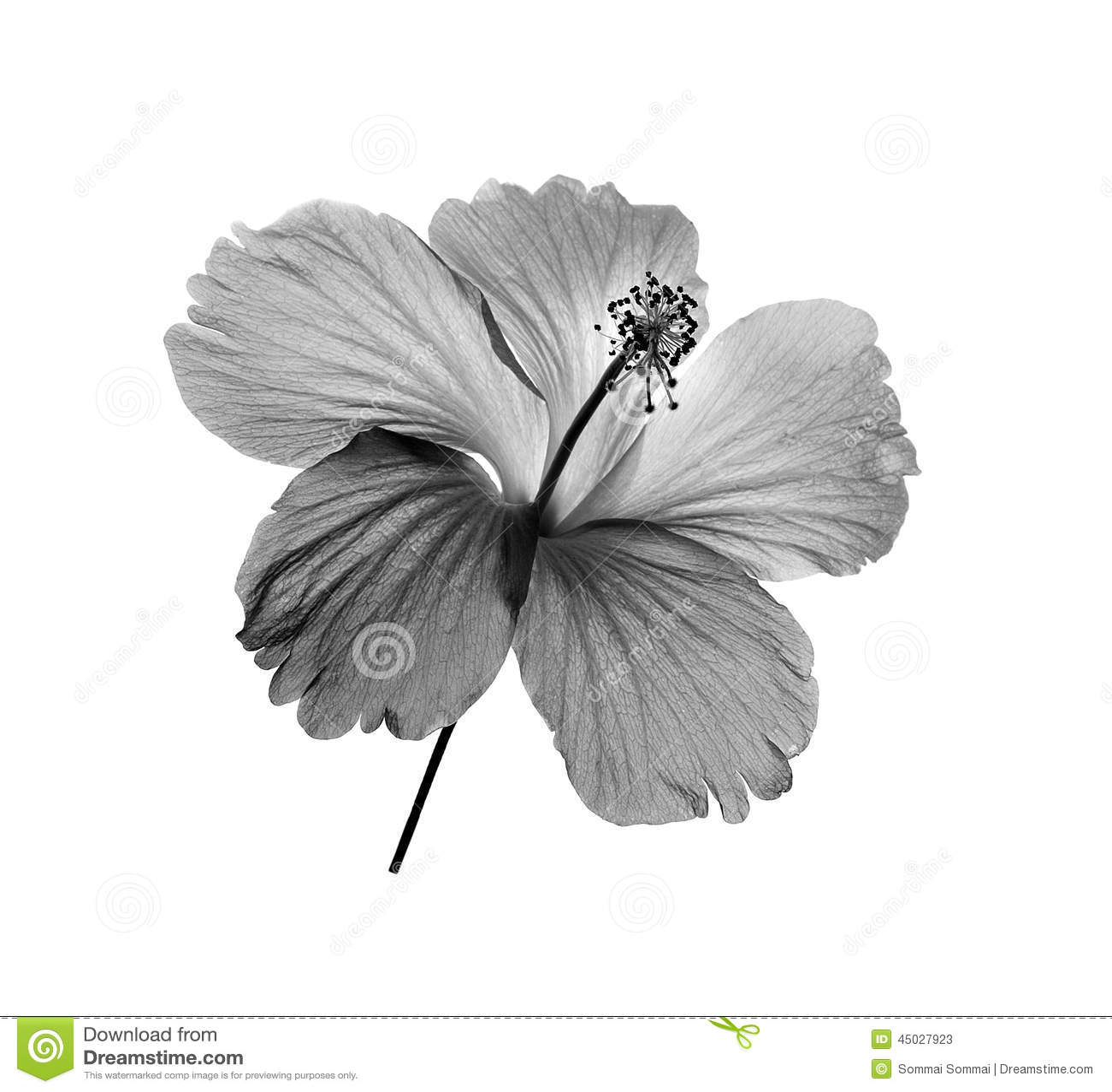 fleur noire et blanche sur le fond blanc image stock image 45027923. Black Bedroom Furniture Sets. Home Design Ideas