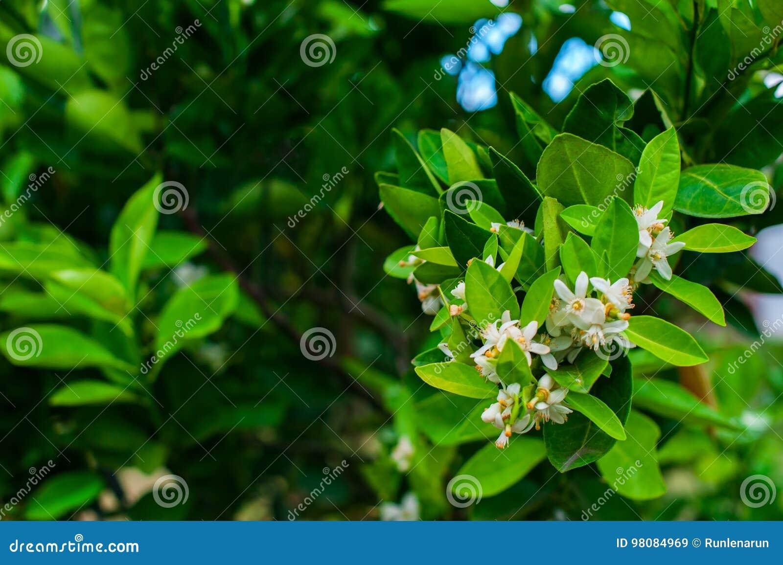 Fleur orange au-dessus du fond de feuille de nature, fleurs du ` o du fleur d