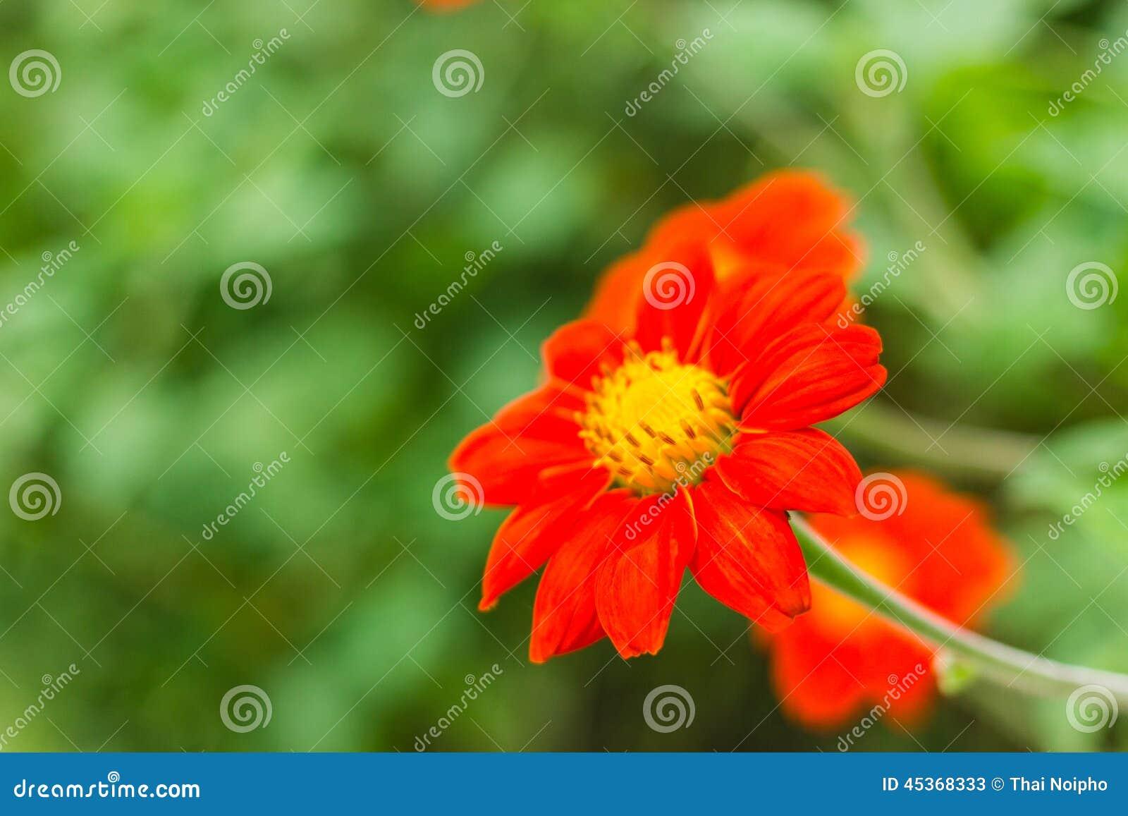Fleur orange en nature