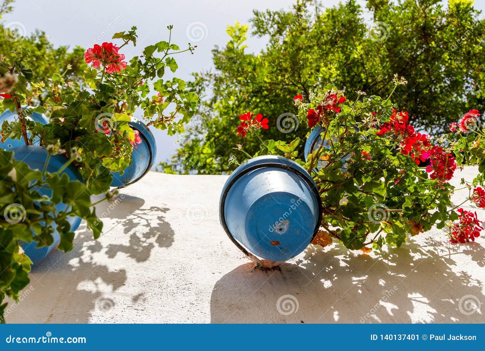 Fleur-pots bleus sur un mur blanchi