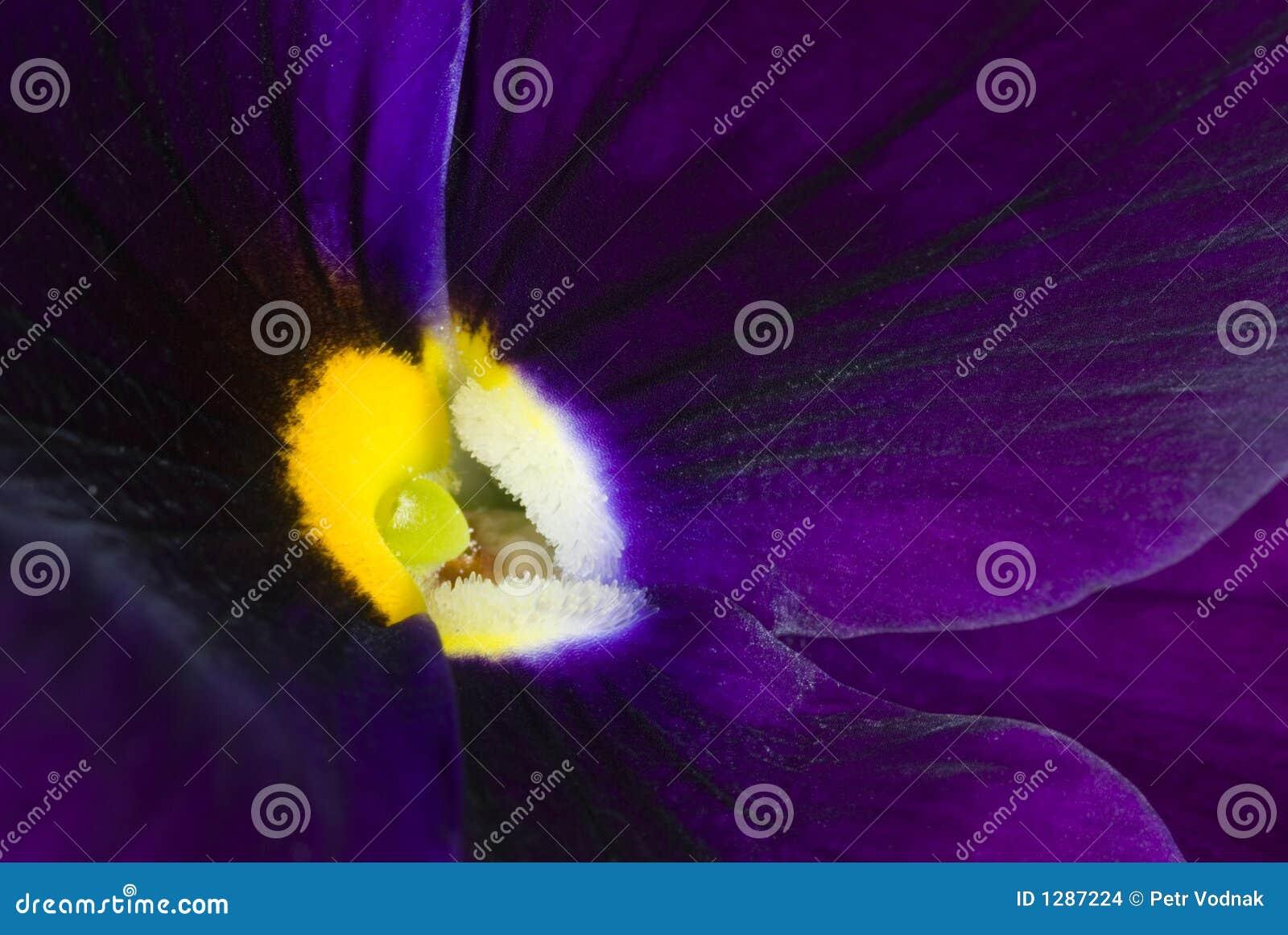 Fleur pourprée de fleur