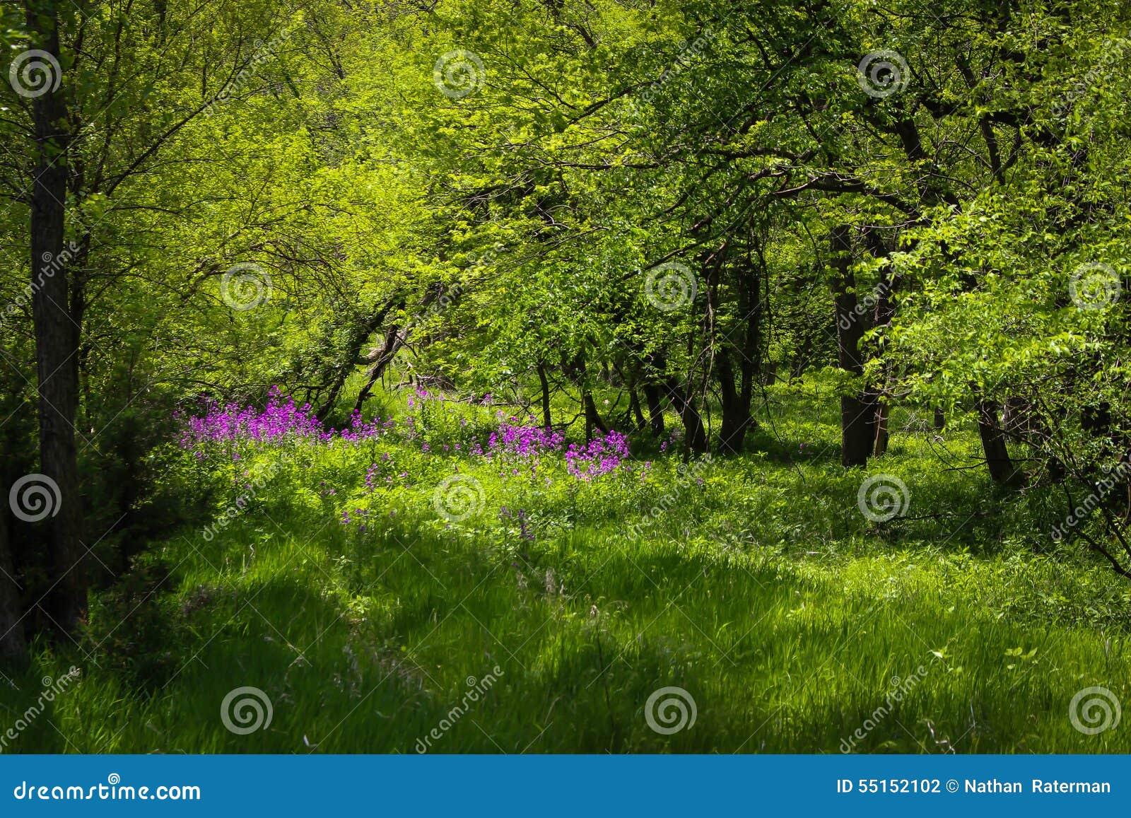Fleur pourpre cachée profondément dans la campagne
