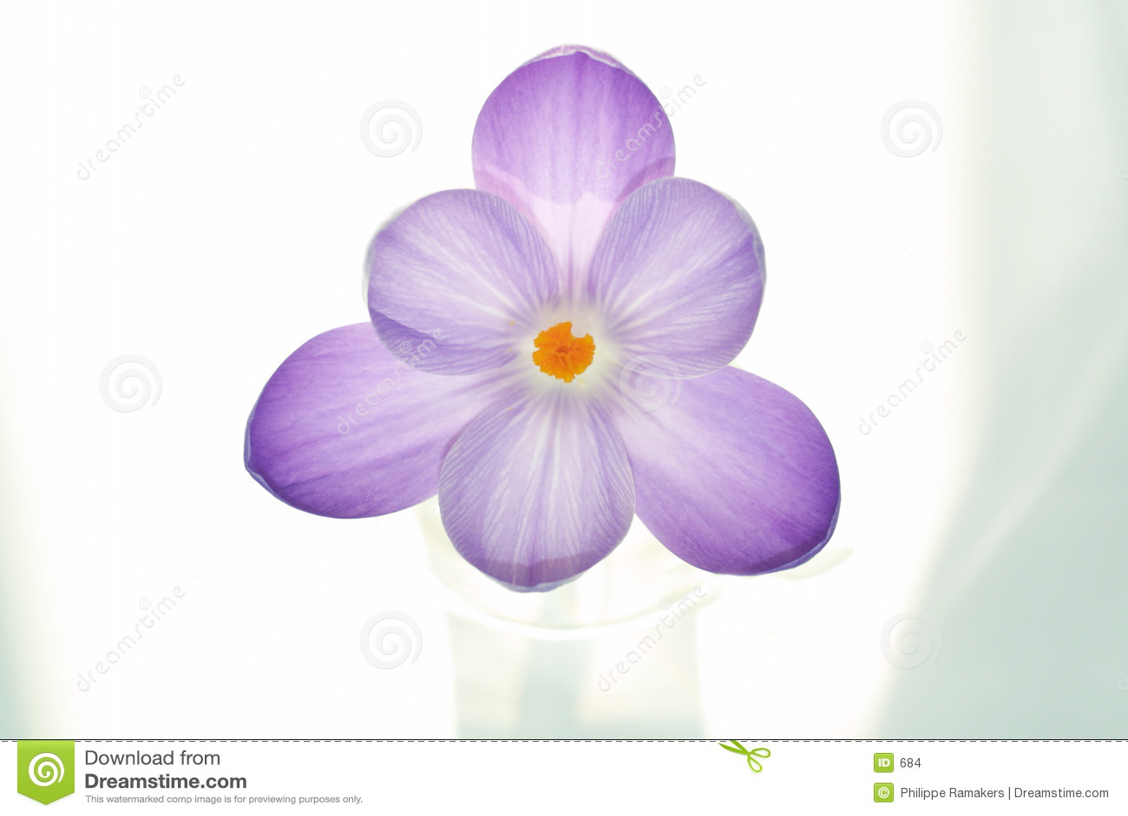 Fleur pure de safran