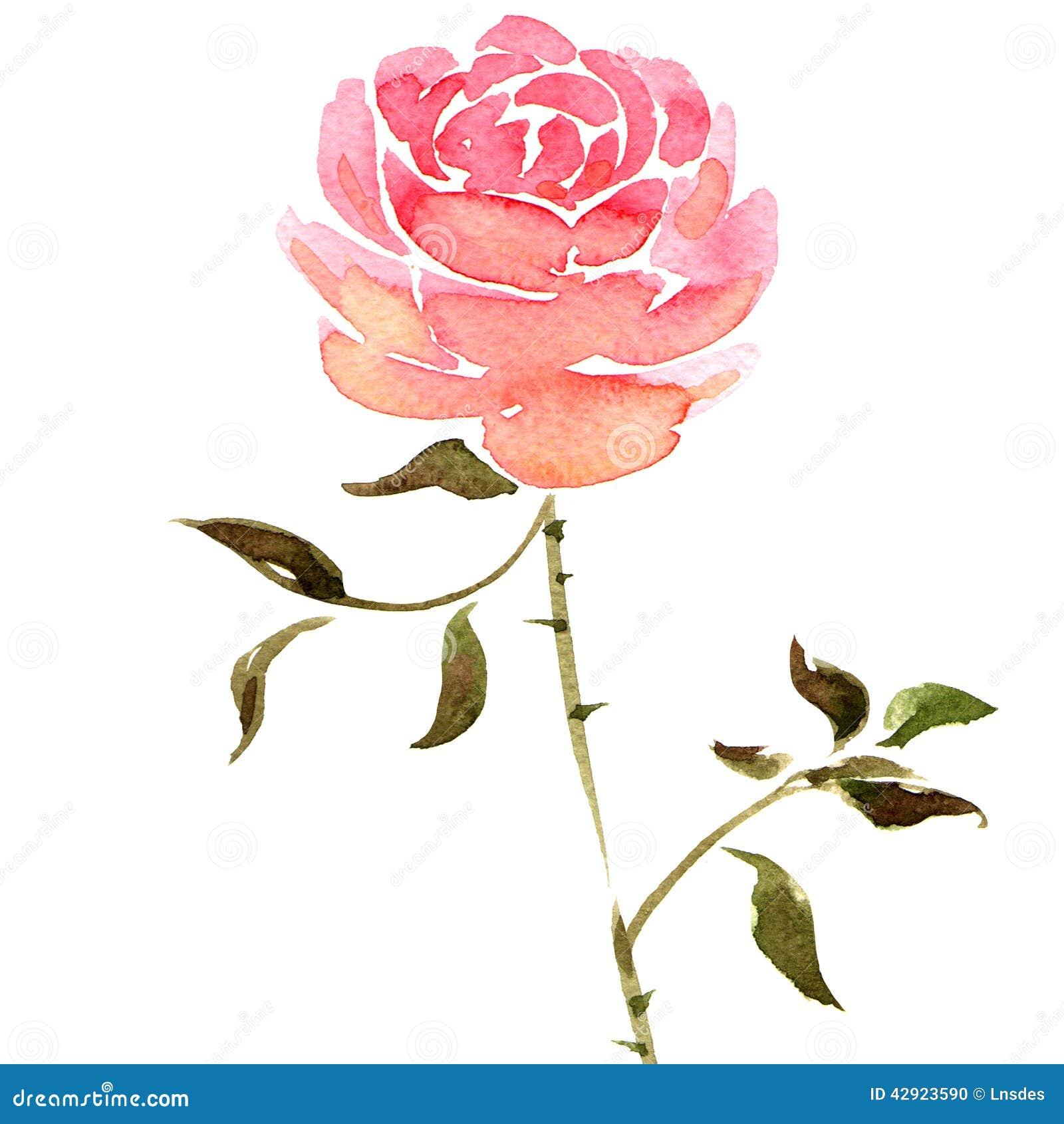 Fleur Rose Aquarelle Idee D Image De Fleur