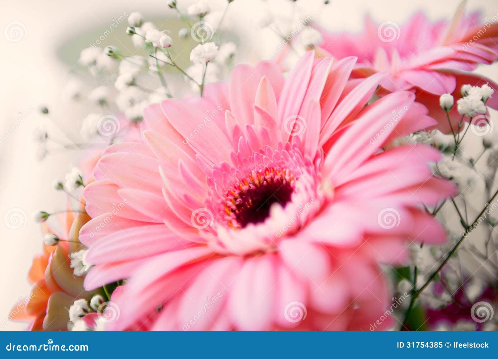 Fleur rose de gerber