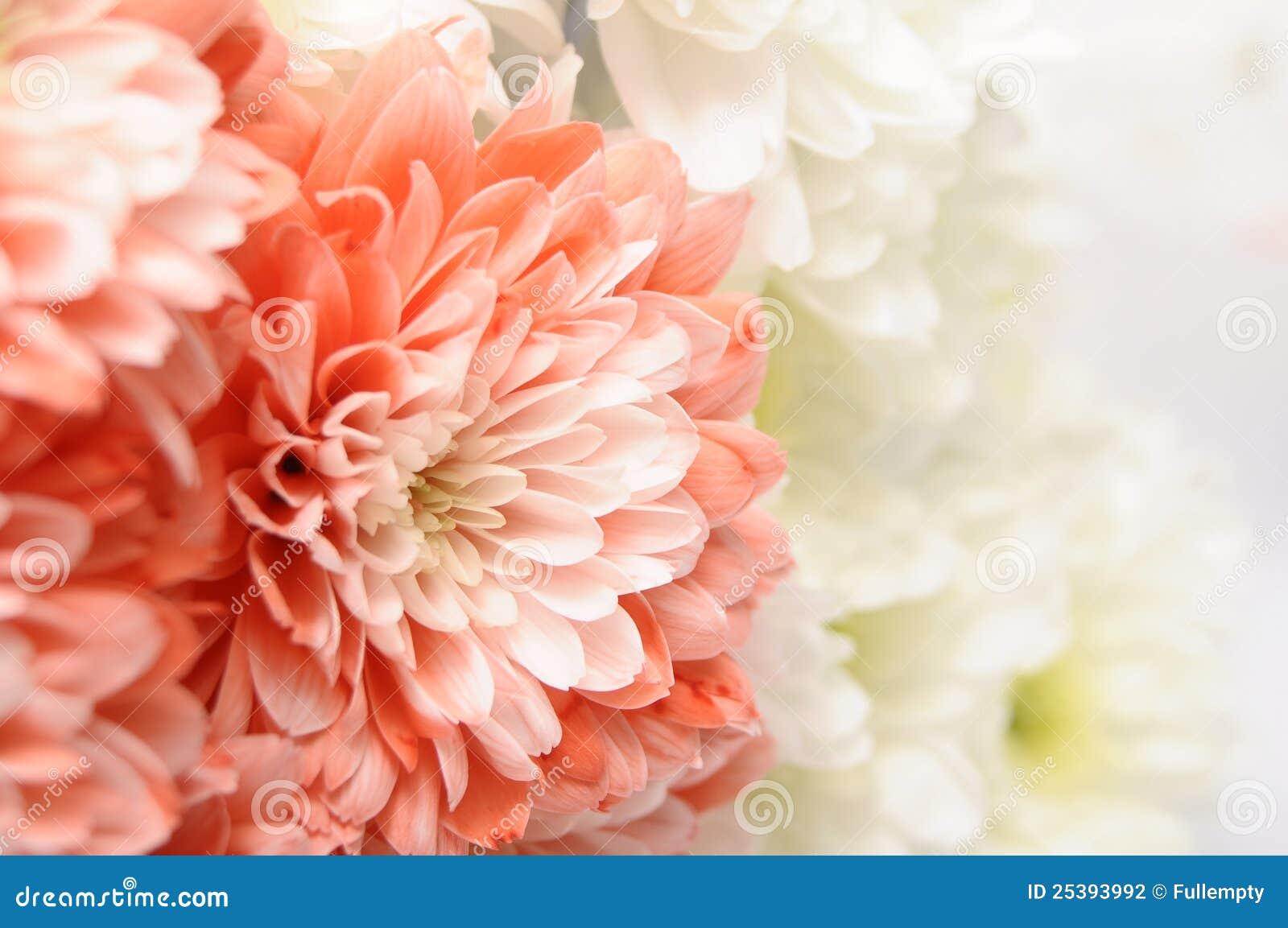 fleur blanche et rose | la pilounette