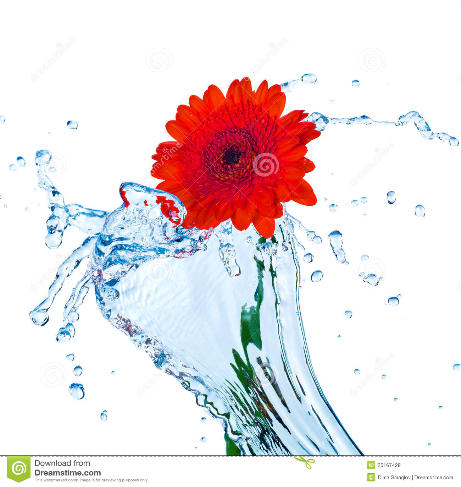 Fleur rouge avec l éclaboussure de l eau